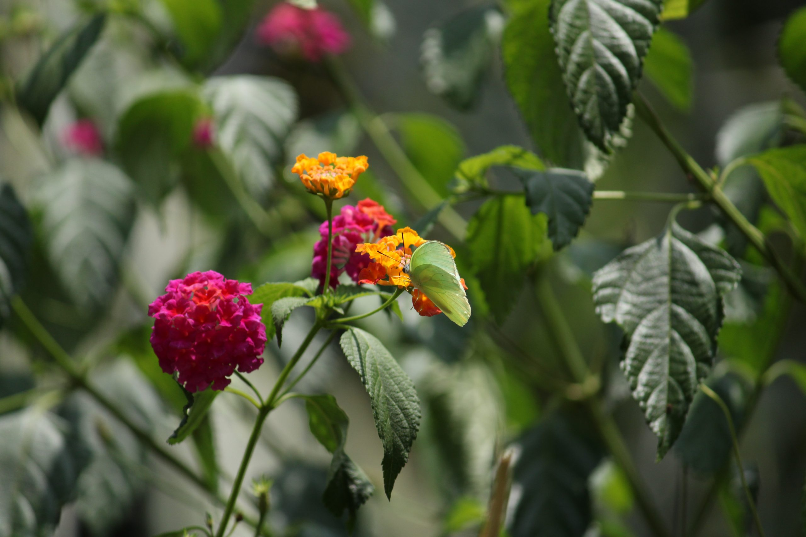 Aesthetic flowers.