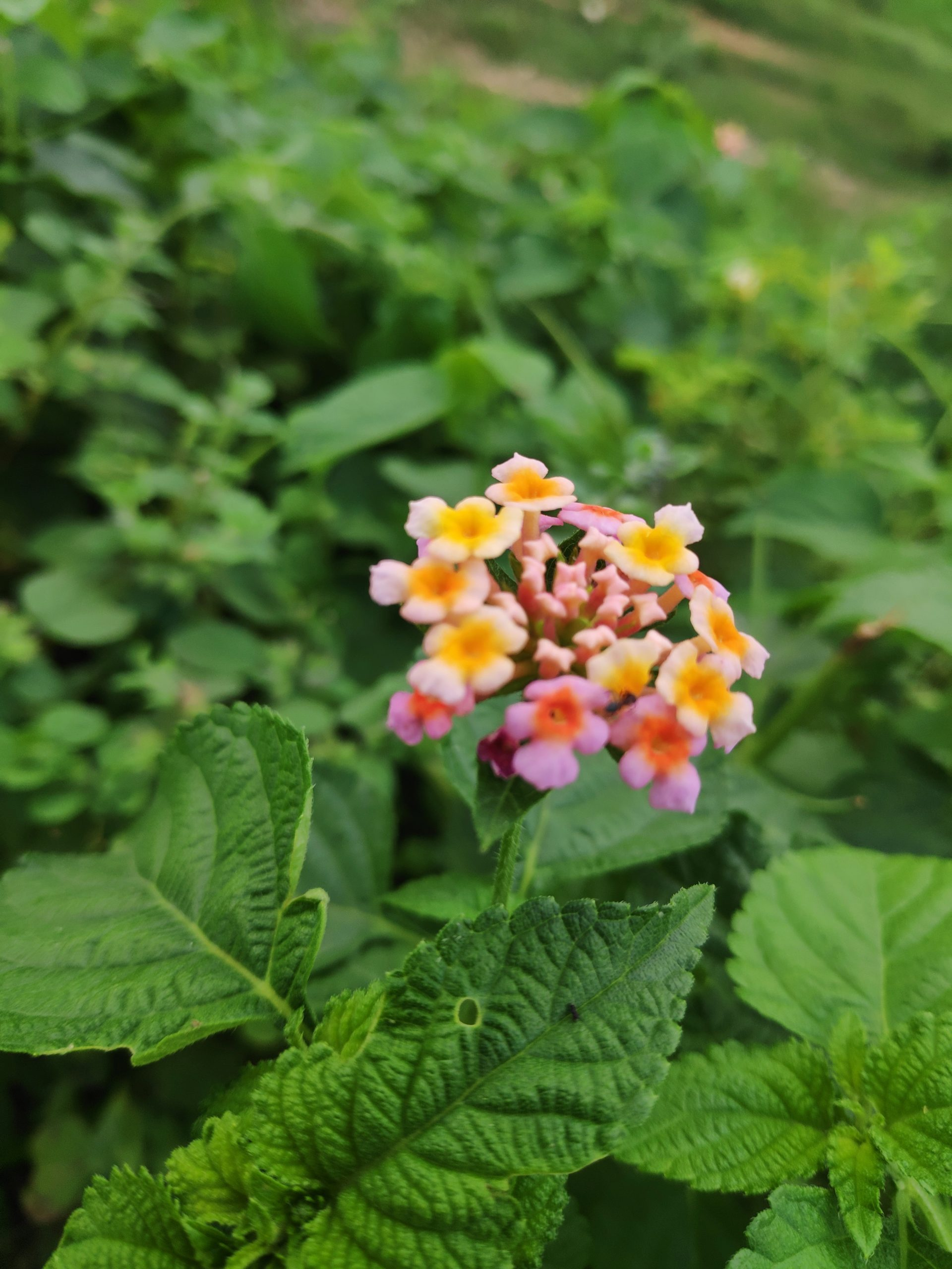 Flowers of a plant