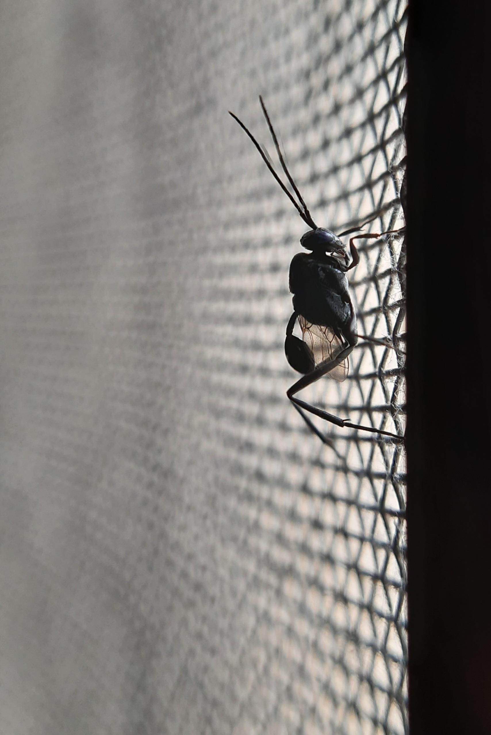 Monochromatic Ant Closeup
