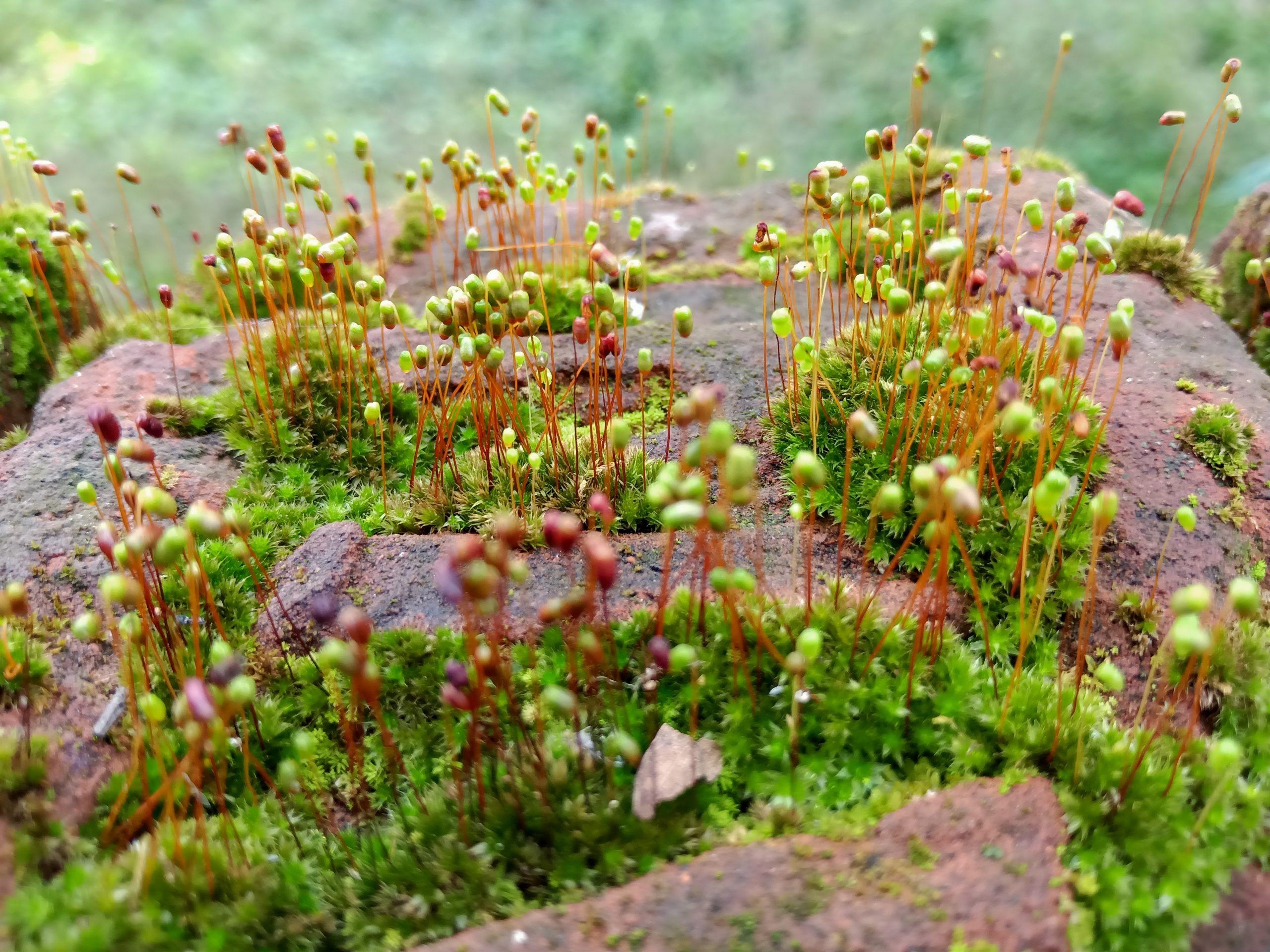 Grass on rock