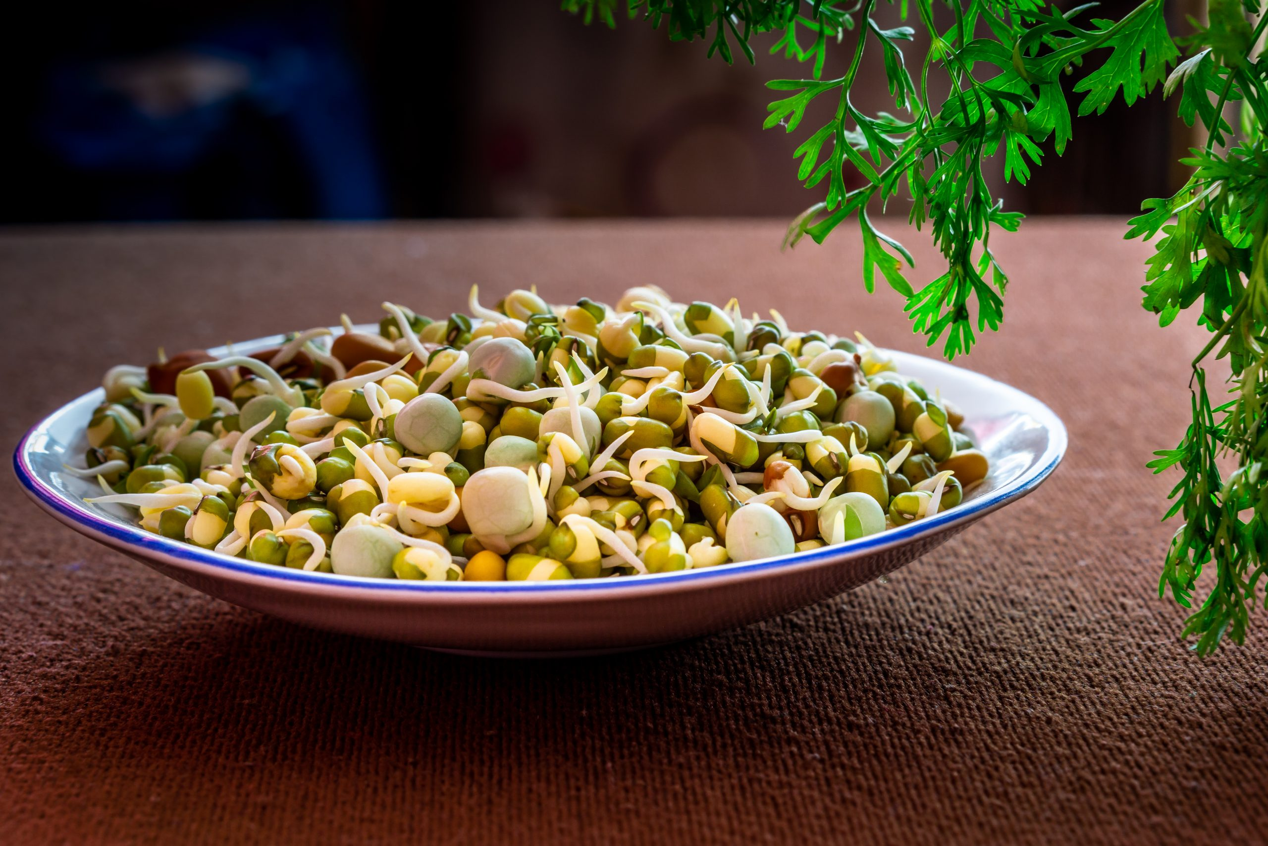 Healthy sprouts on a plate