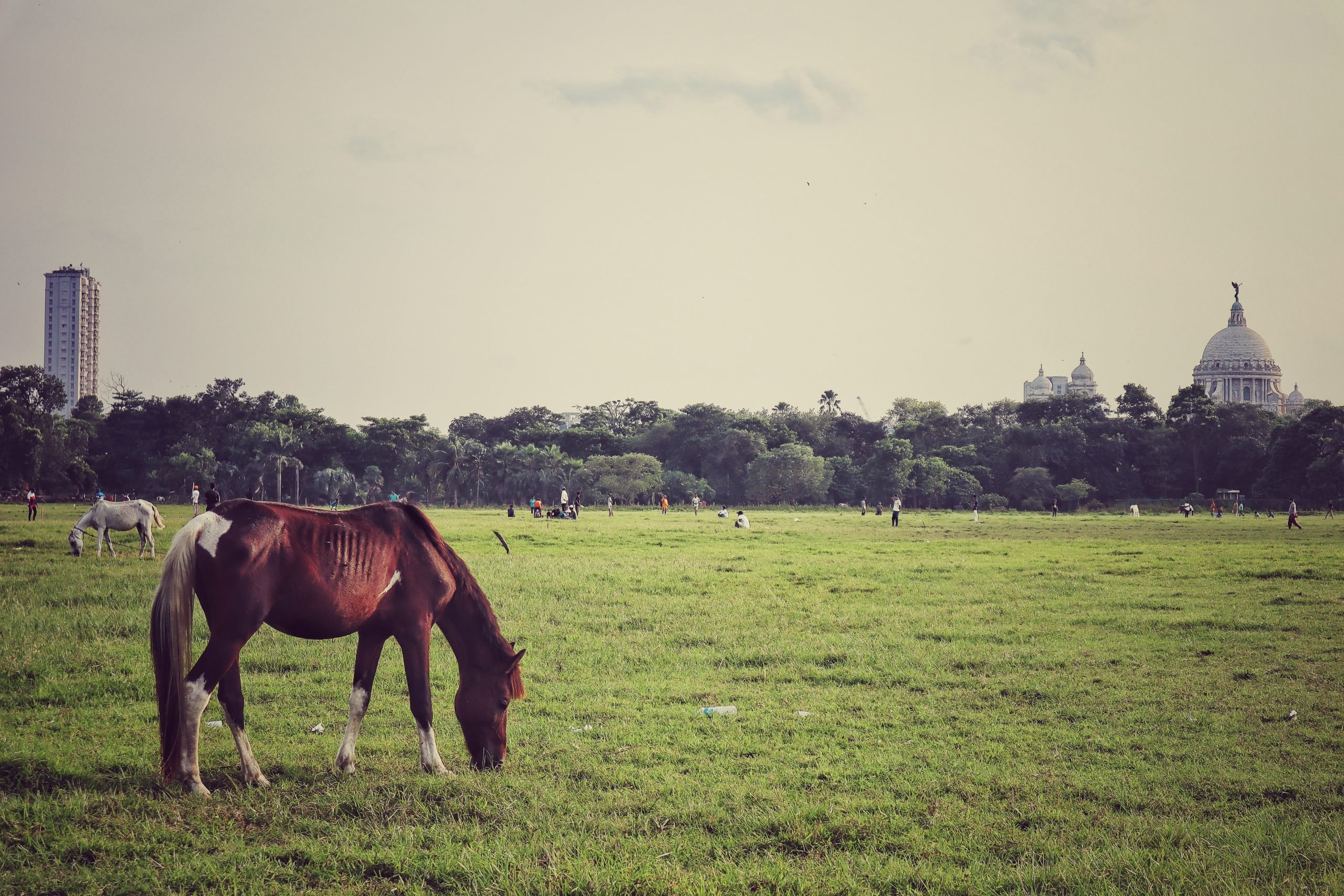 Horse grazing in filed