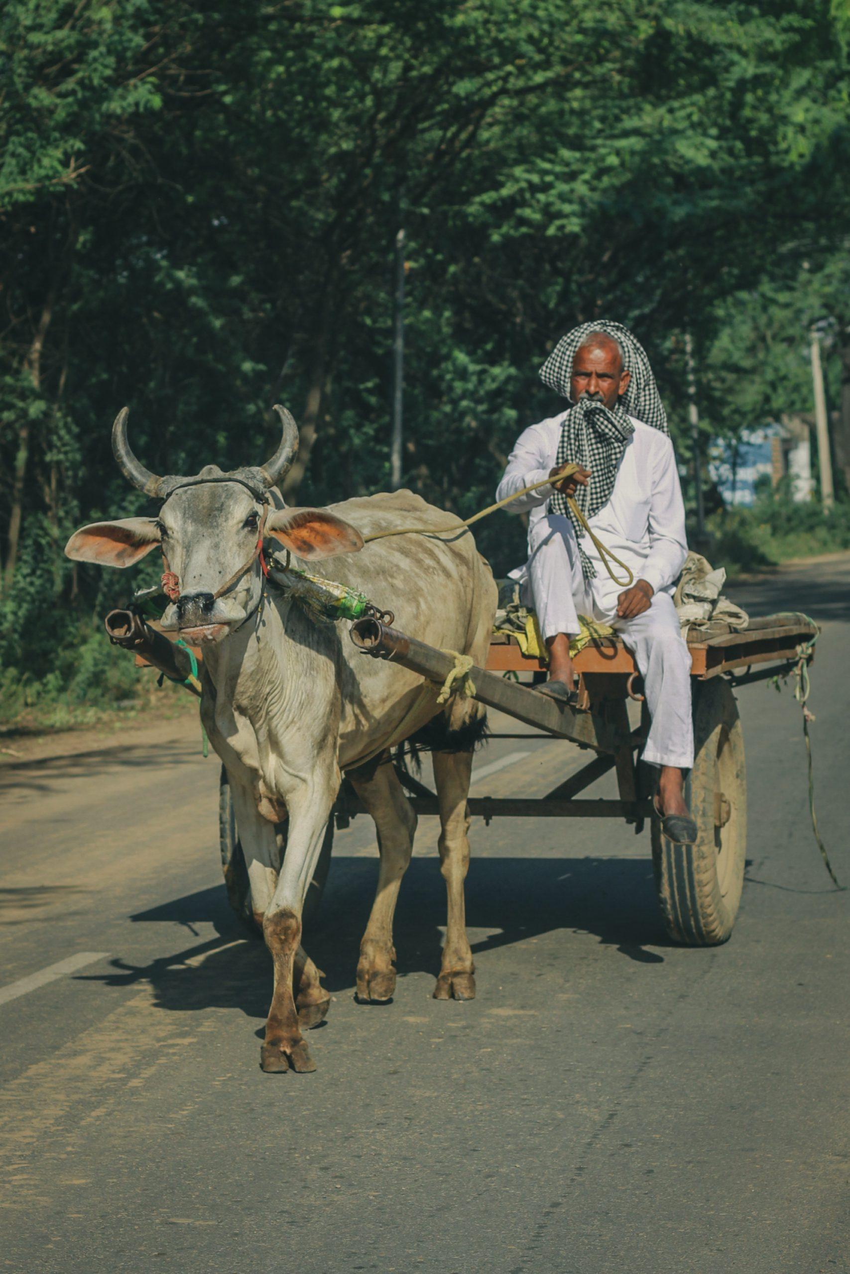 Man With Bullock Cart