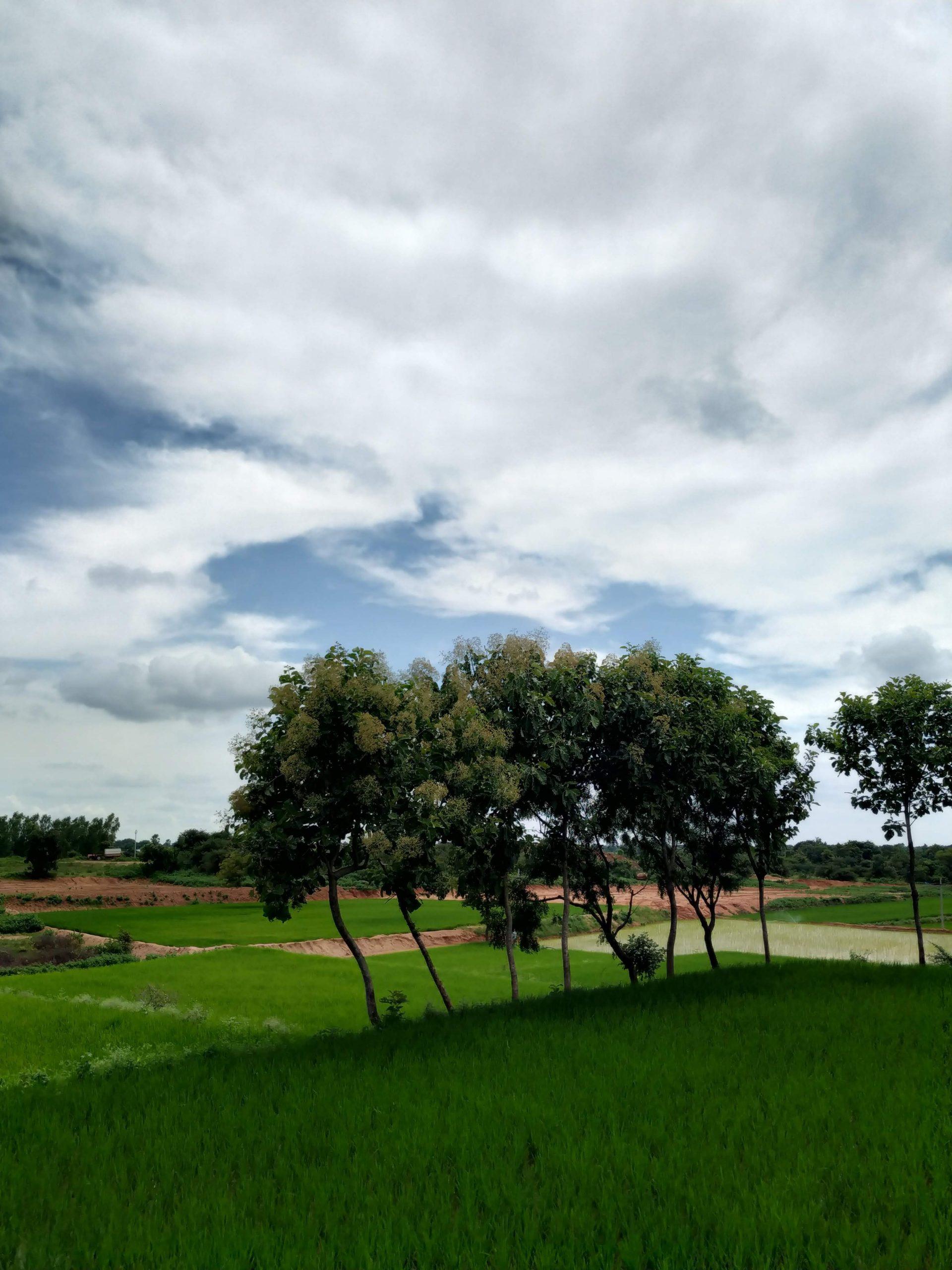 trees growing in a field