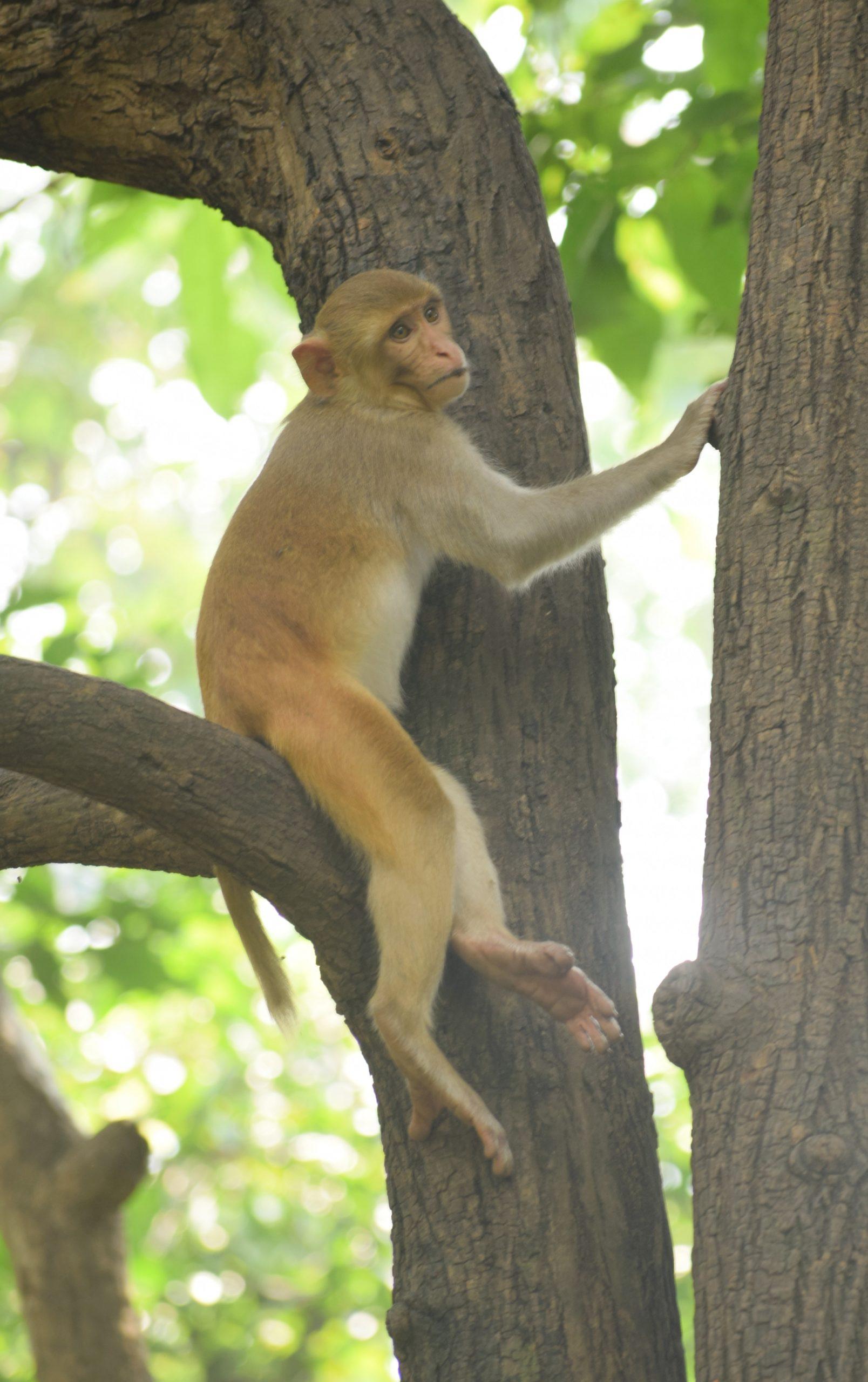 Monkey sitting on tree