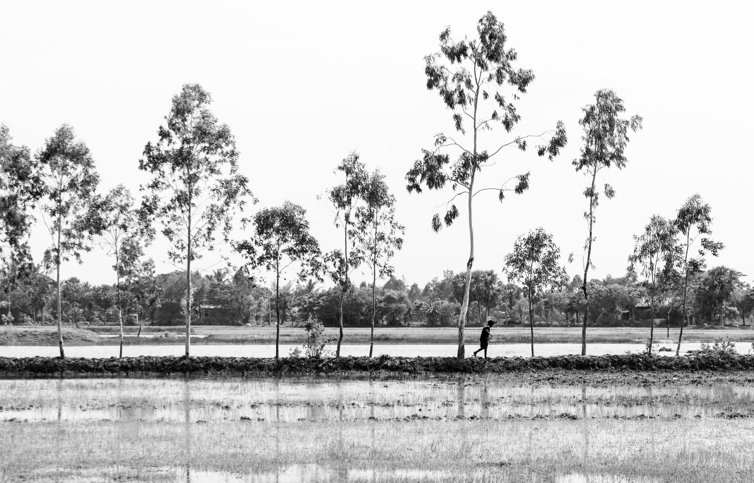 Monochromatic Fields