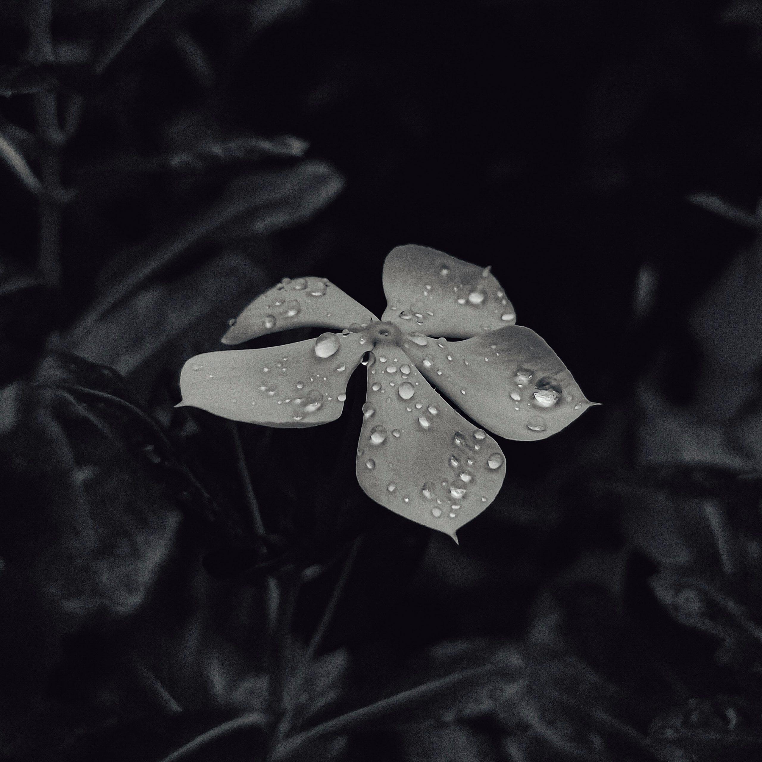 Monochrome Dew