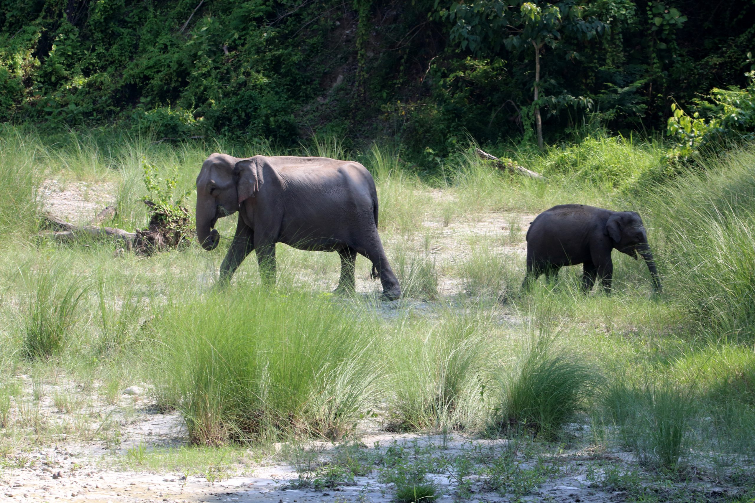 Mother elephant and baby elephant