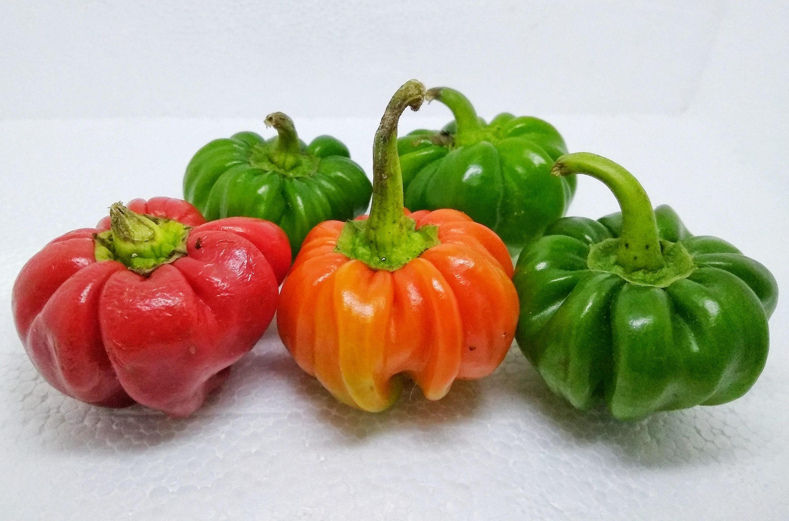 Multicolor capsicums