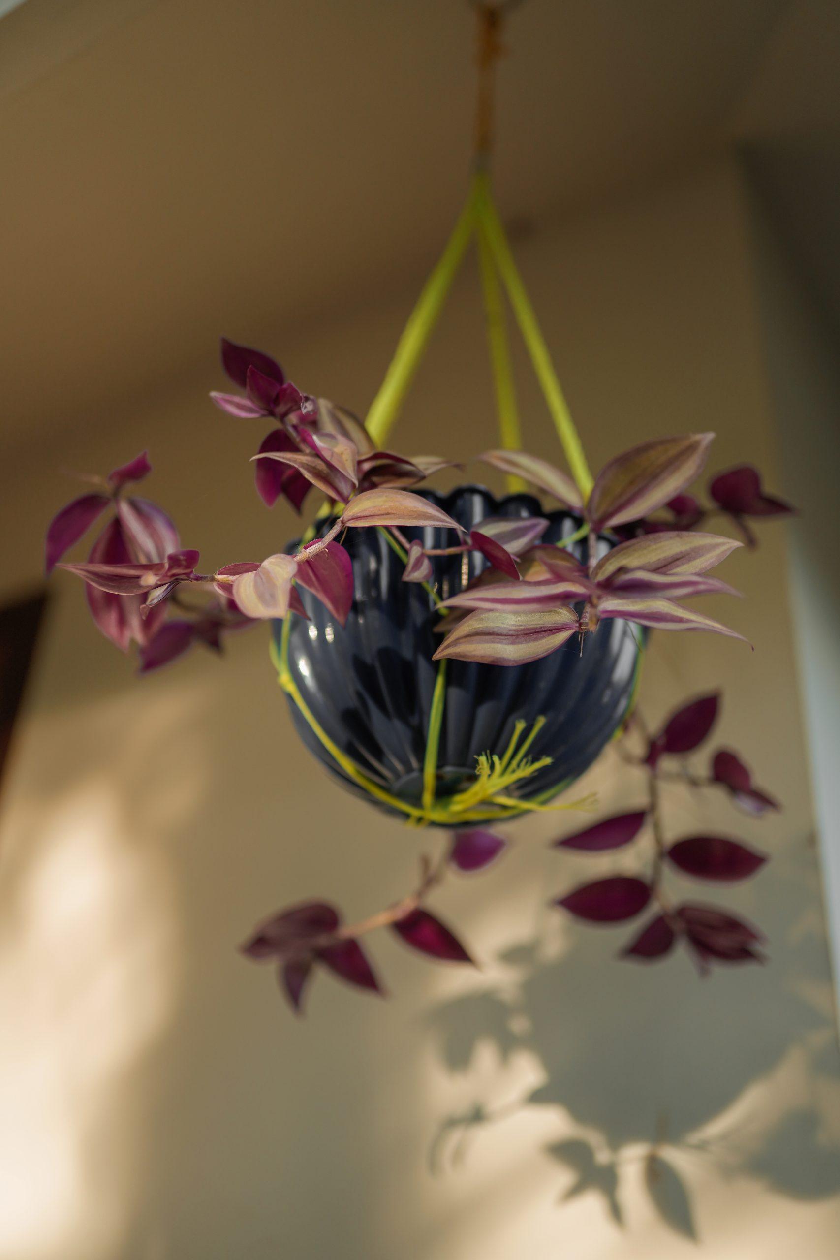 A flower pot hanging