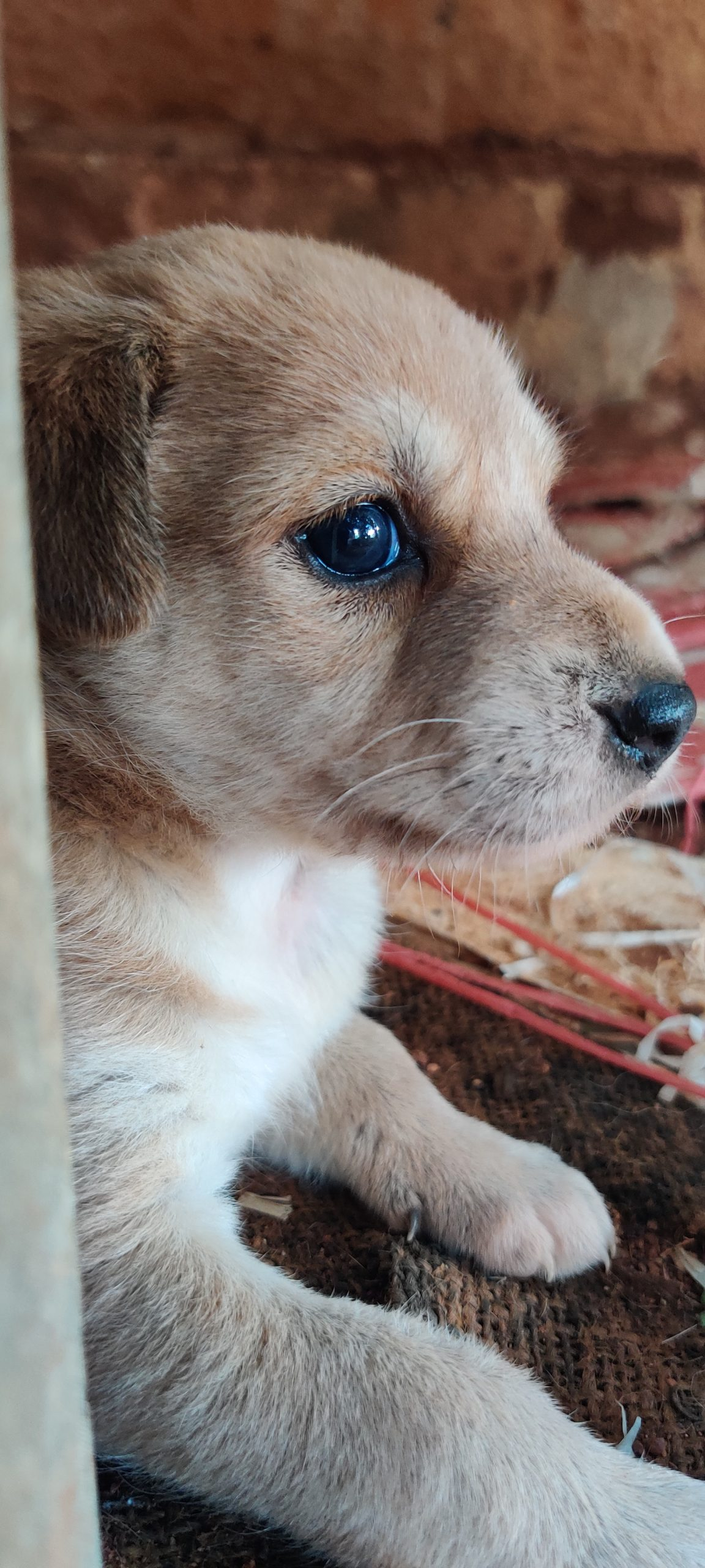 close up of a puppy