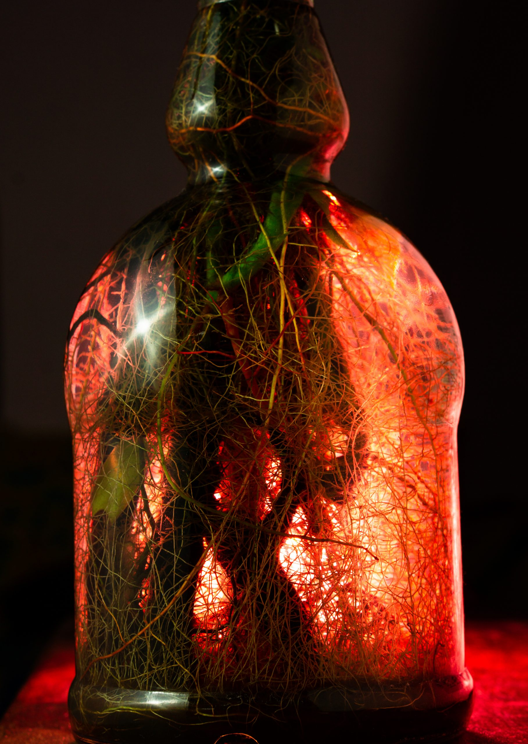 plant root in a bottle