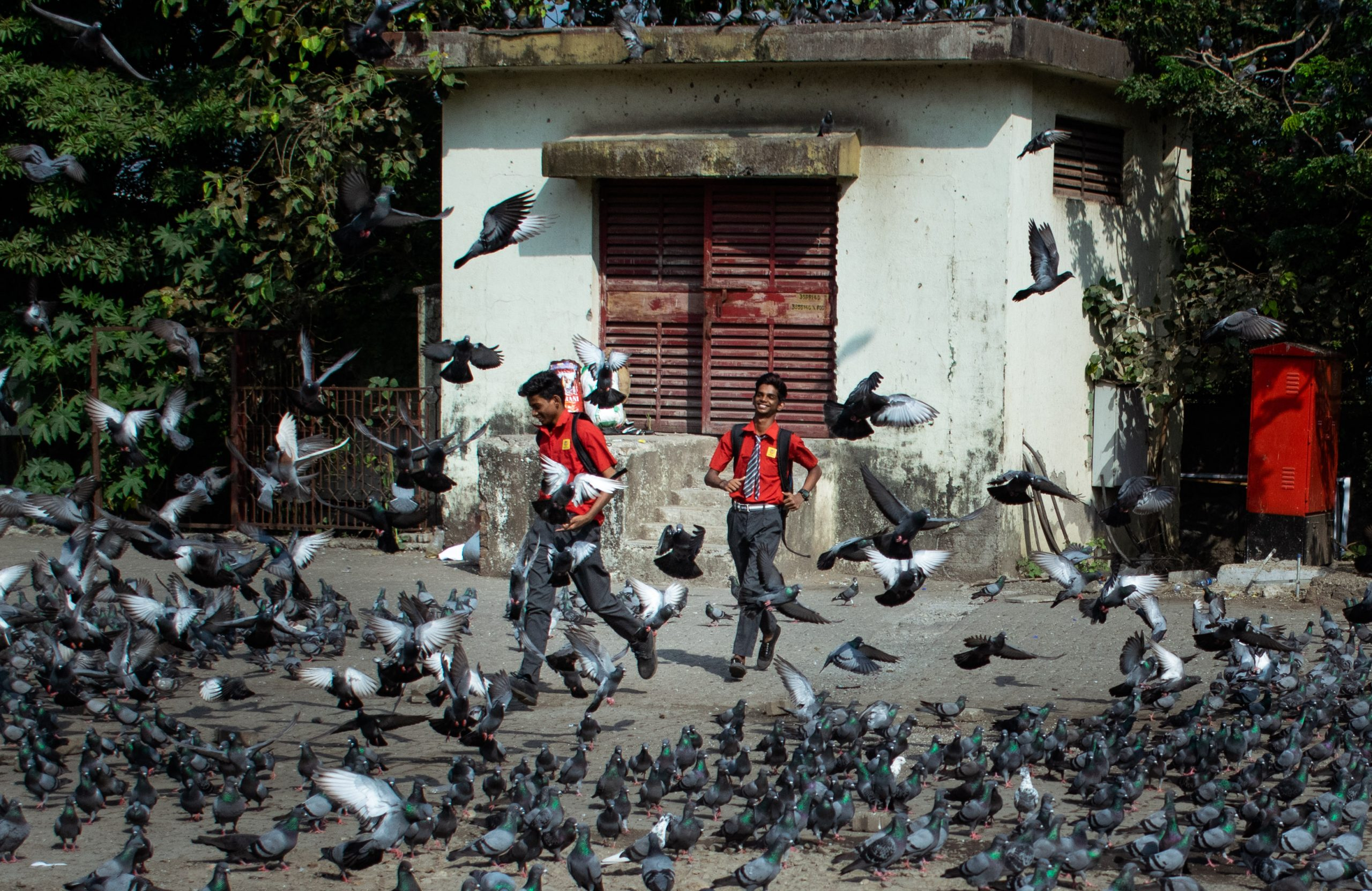 boys running amidst a flock of pigeons