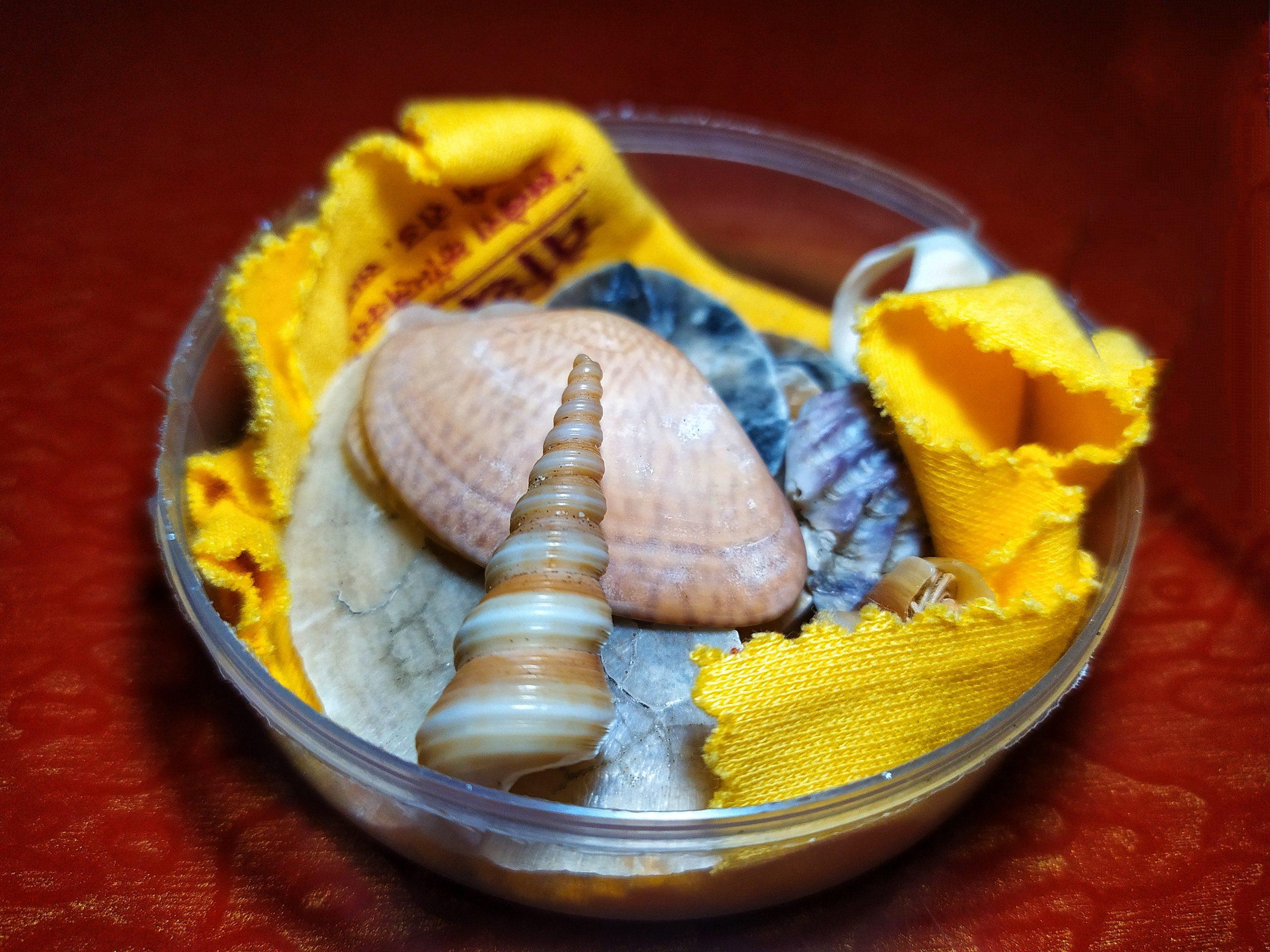 seashells in a bowl