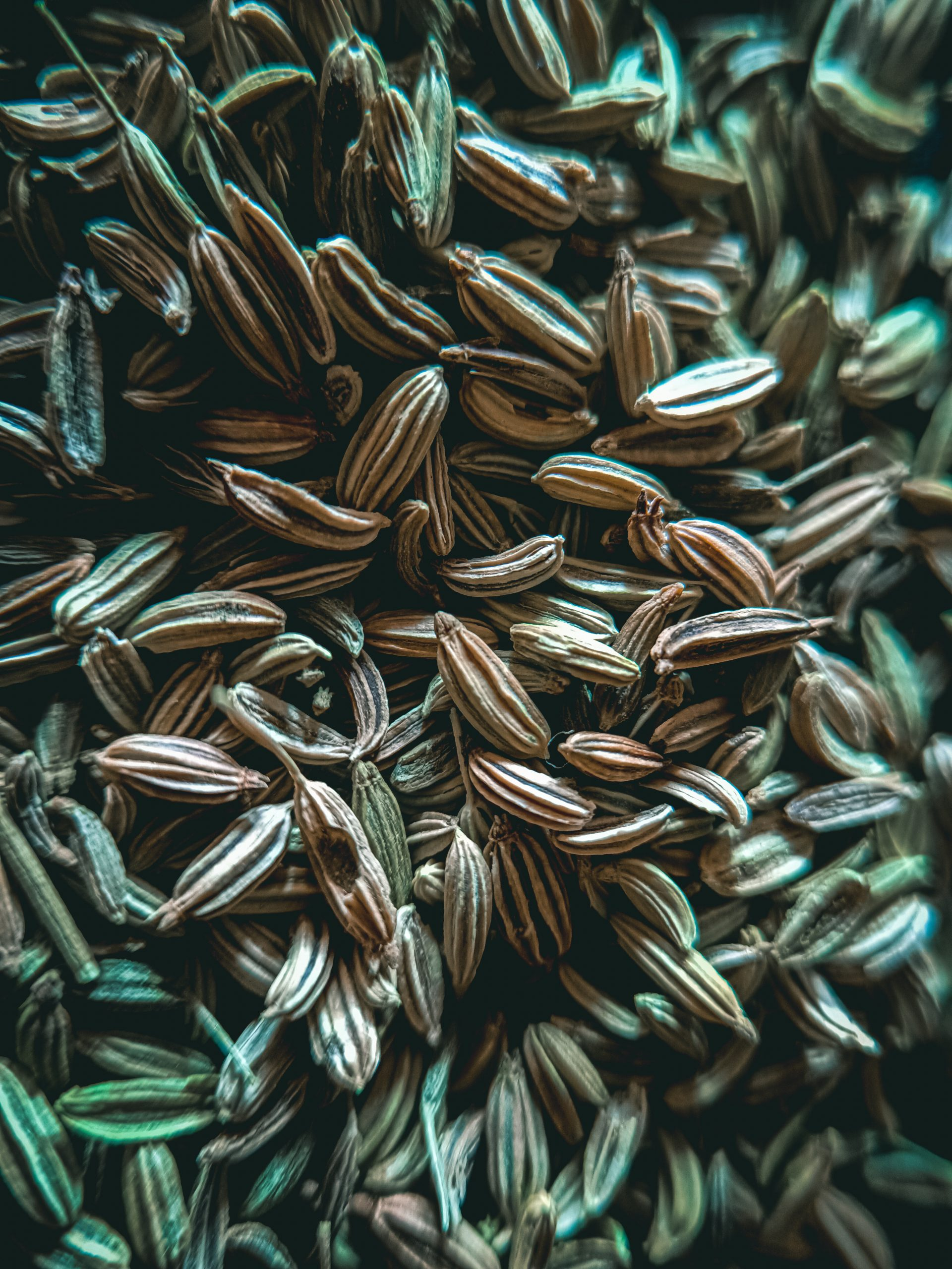 Seeds of Cumin