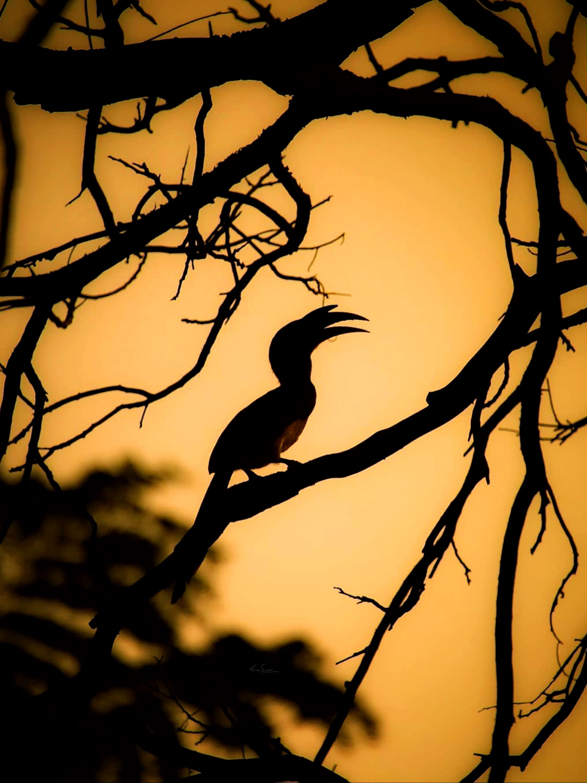 silhouette of bird on a branch
