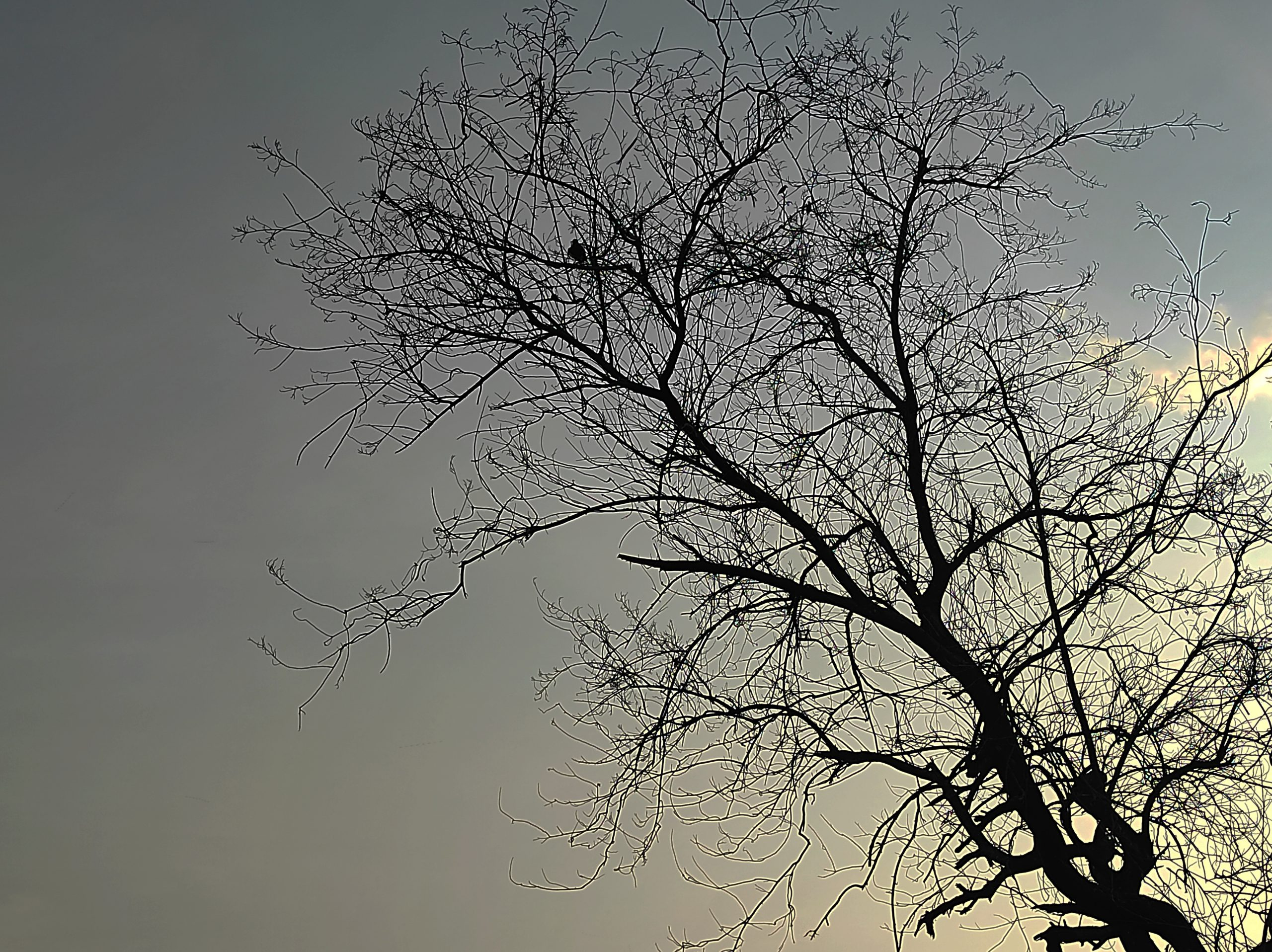 Solitary Tree Silhouette