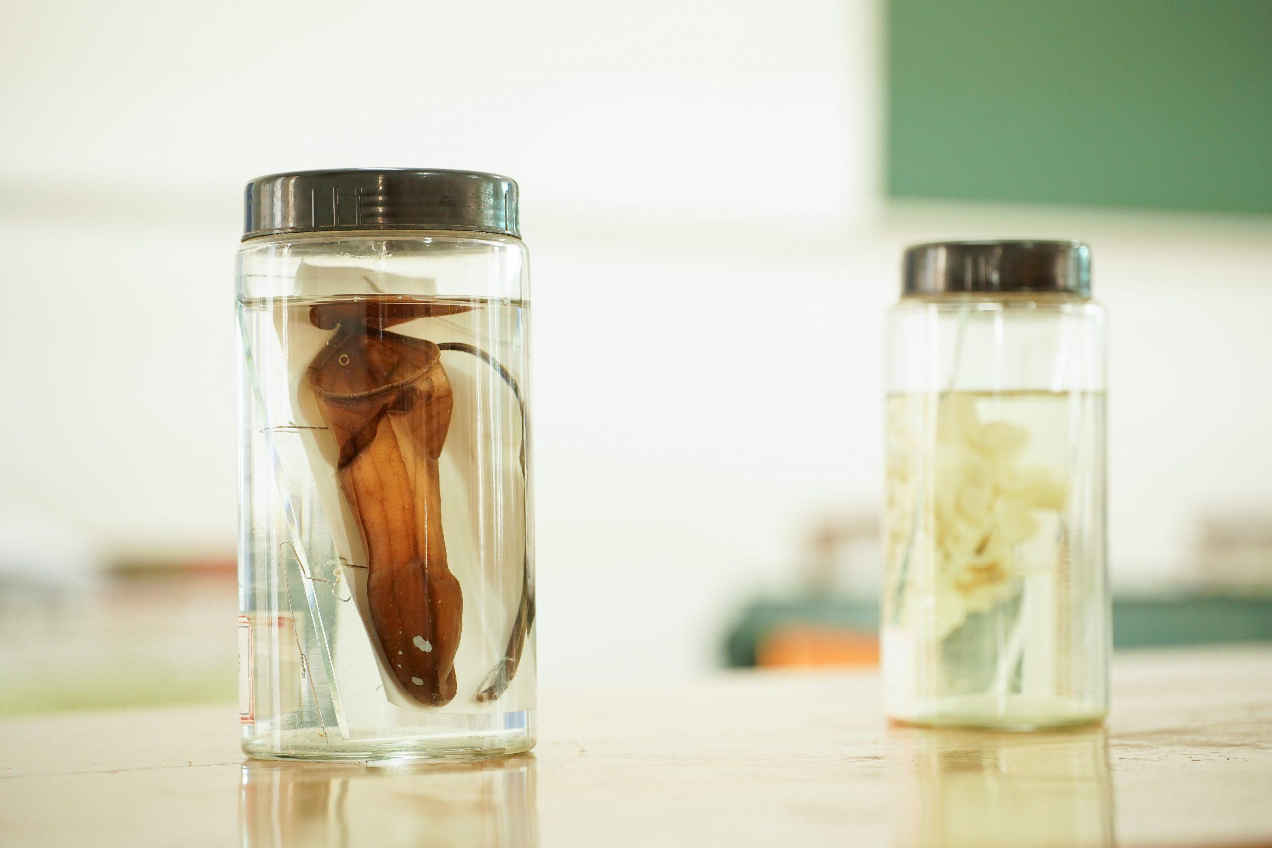 Specimen in a container