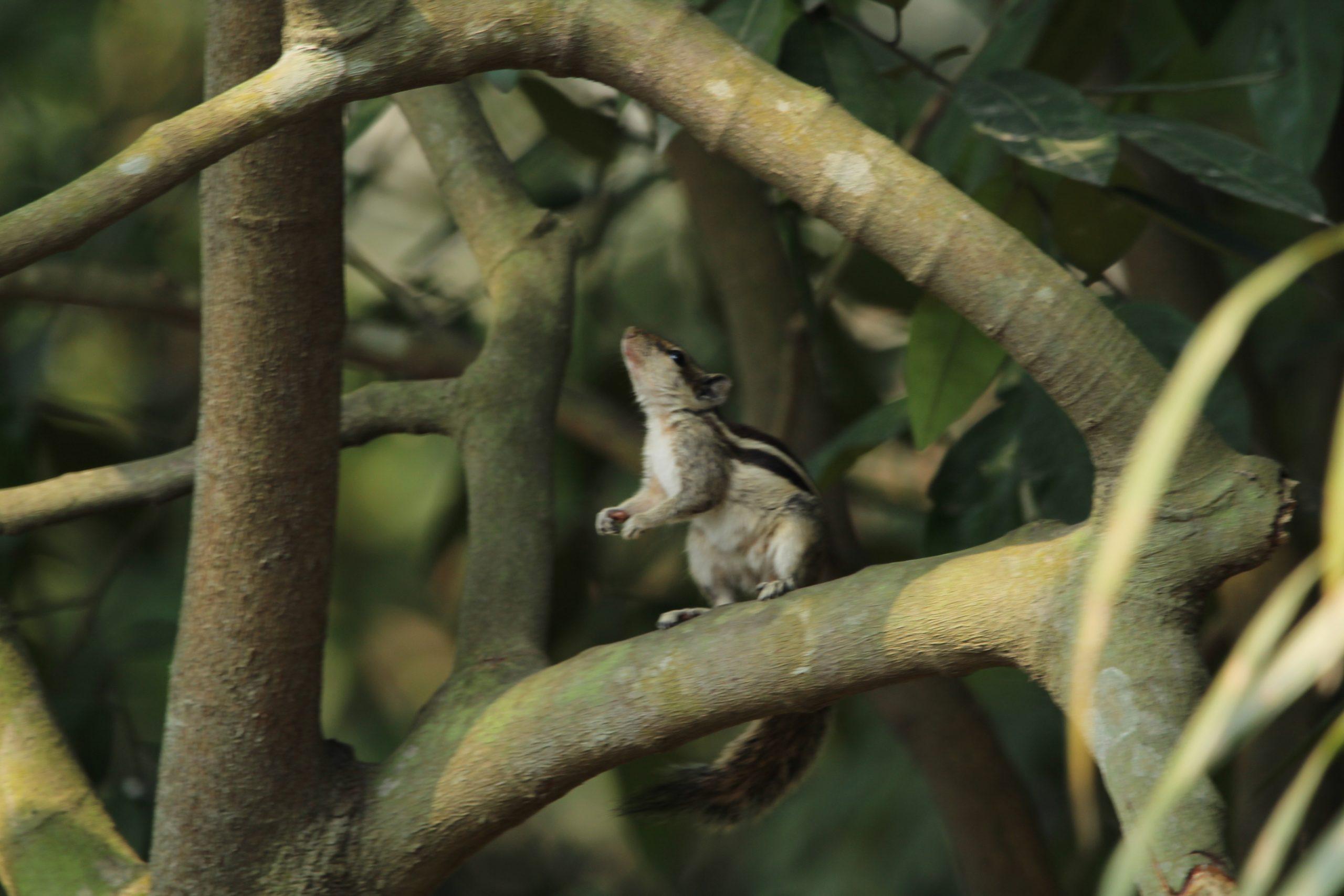 Squirrel on Branch