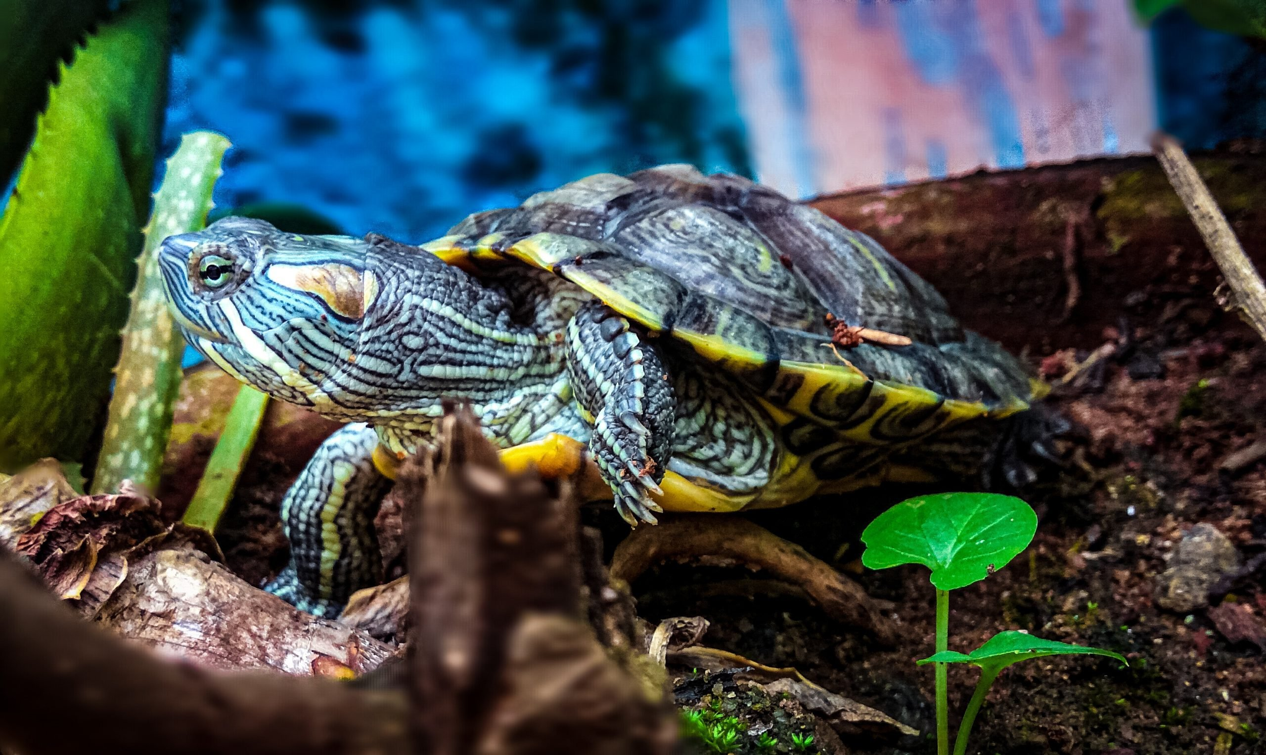 Textured Turtle