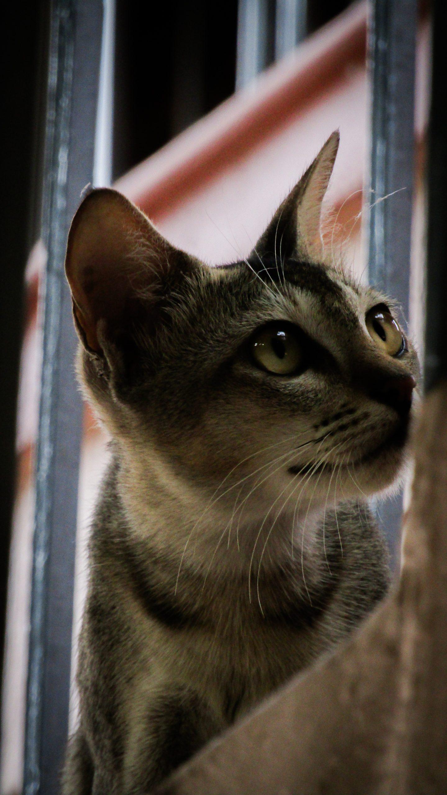 Cat Potrait