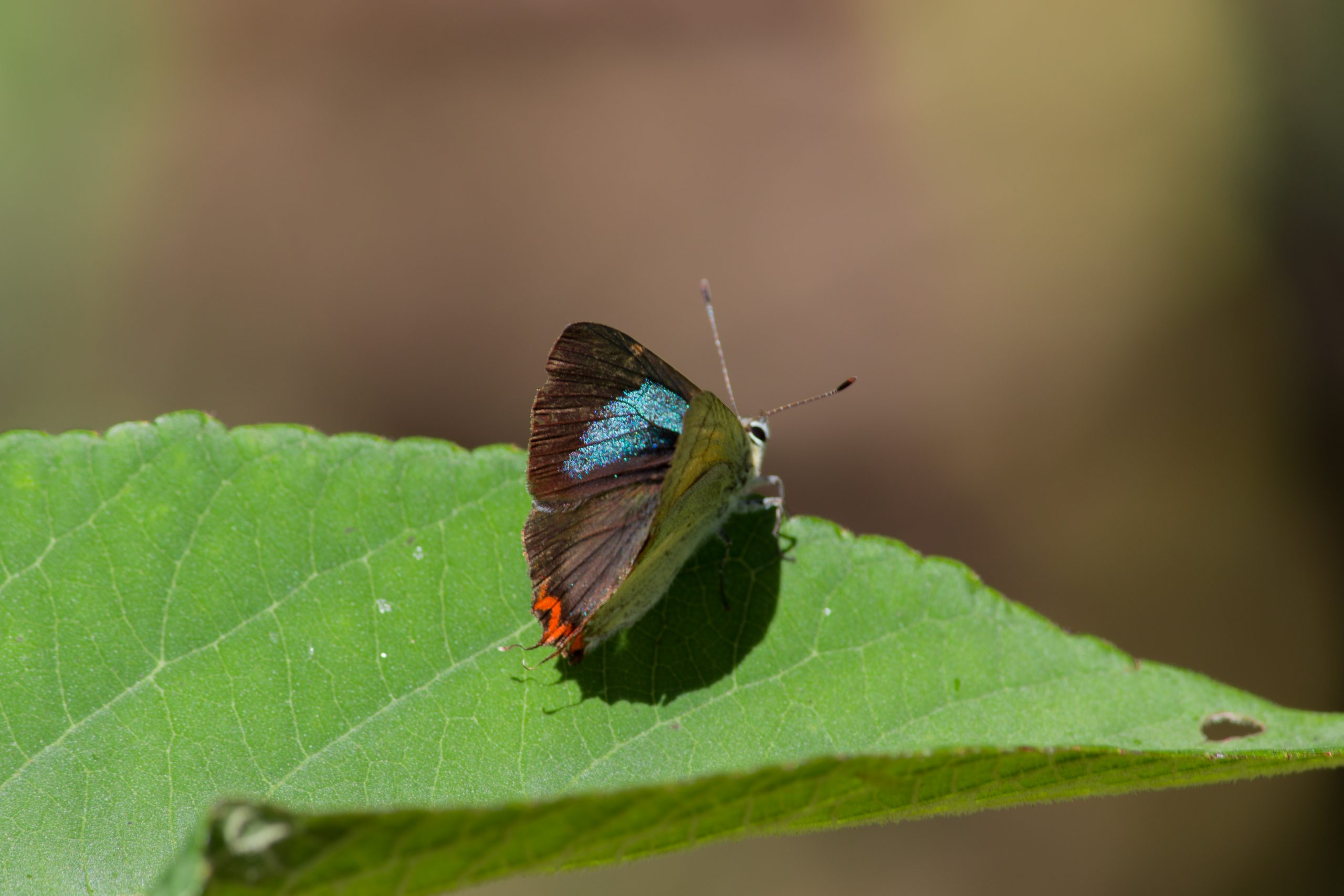 Lovely butterfly on a leaf.
