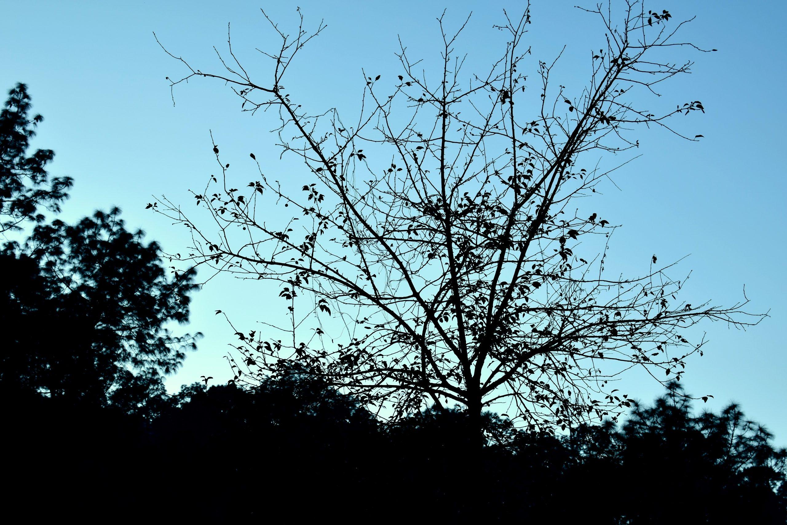 Tree in darkness