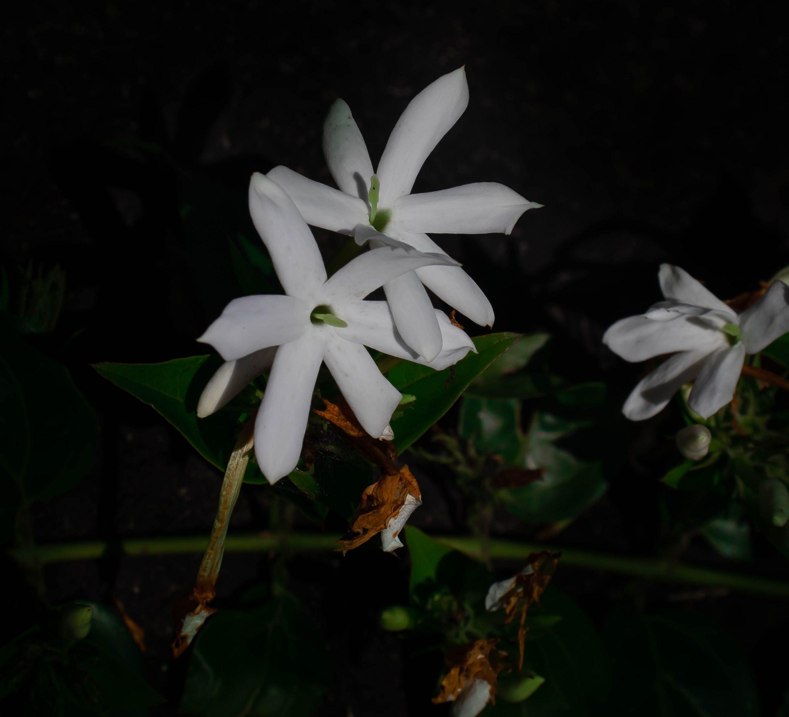 White flower in darkness