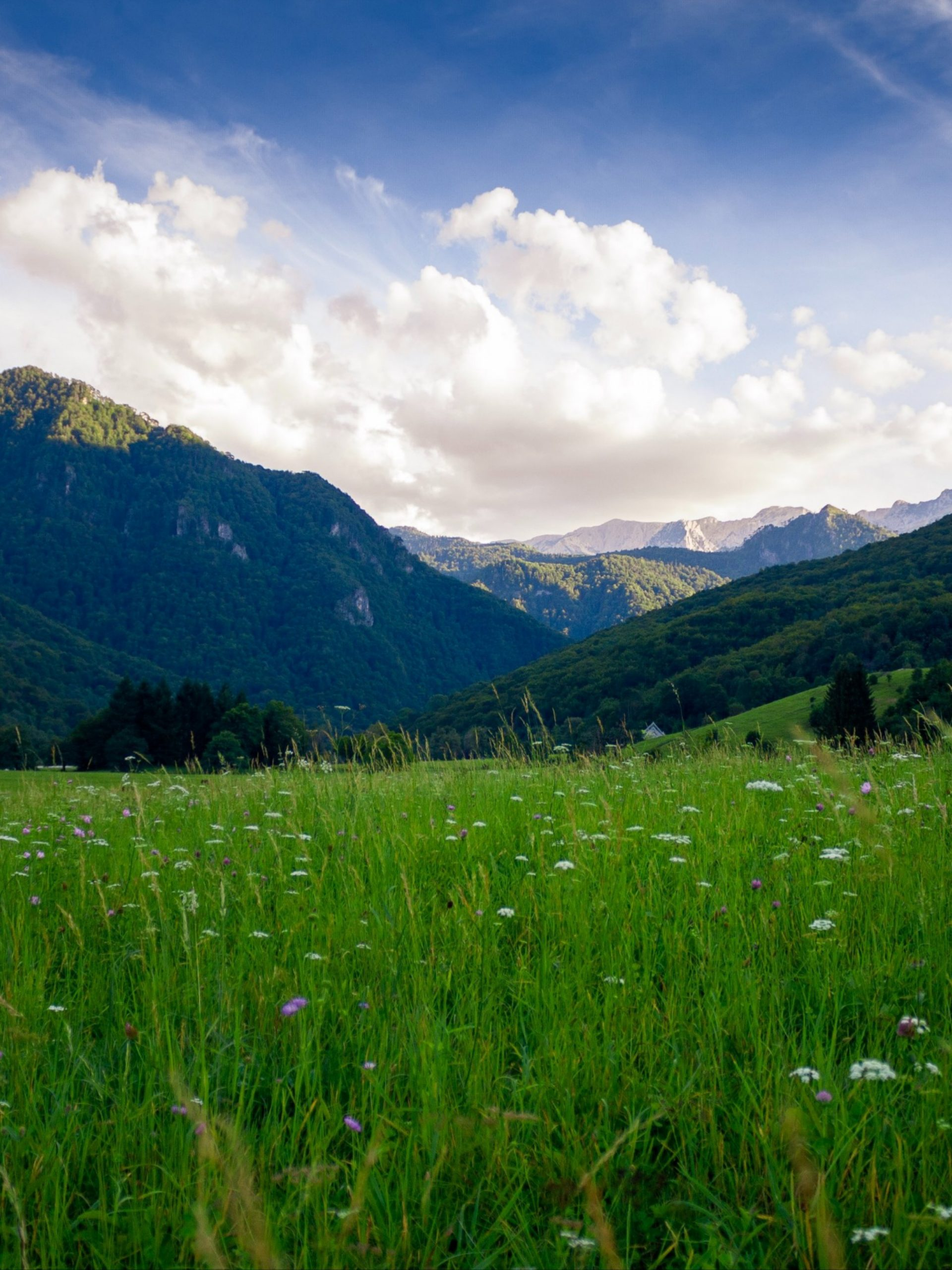 Wild grass and mountains