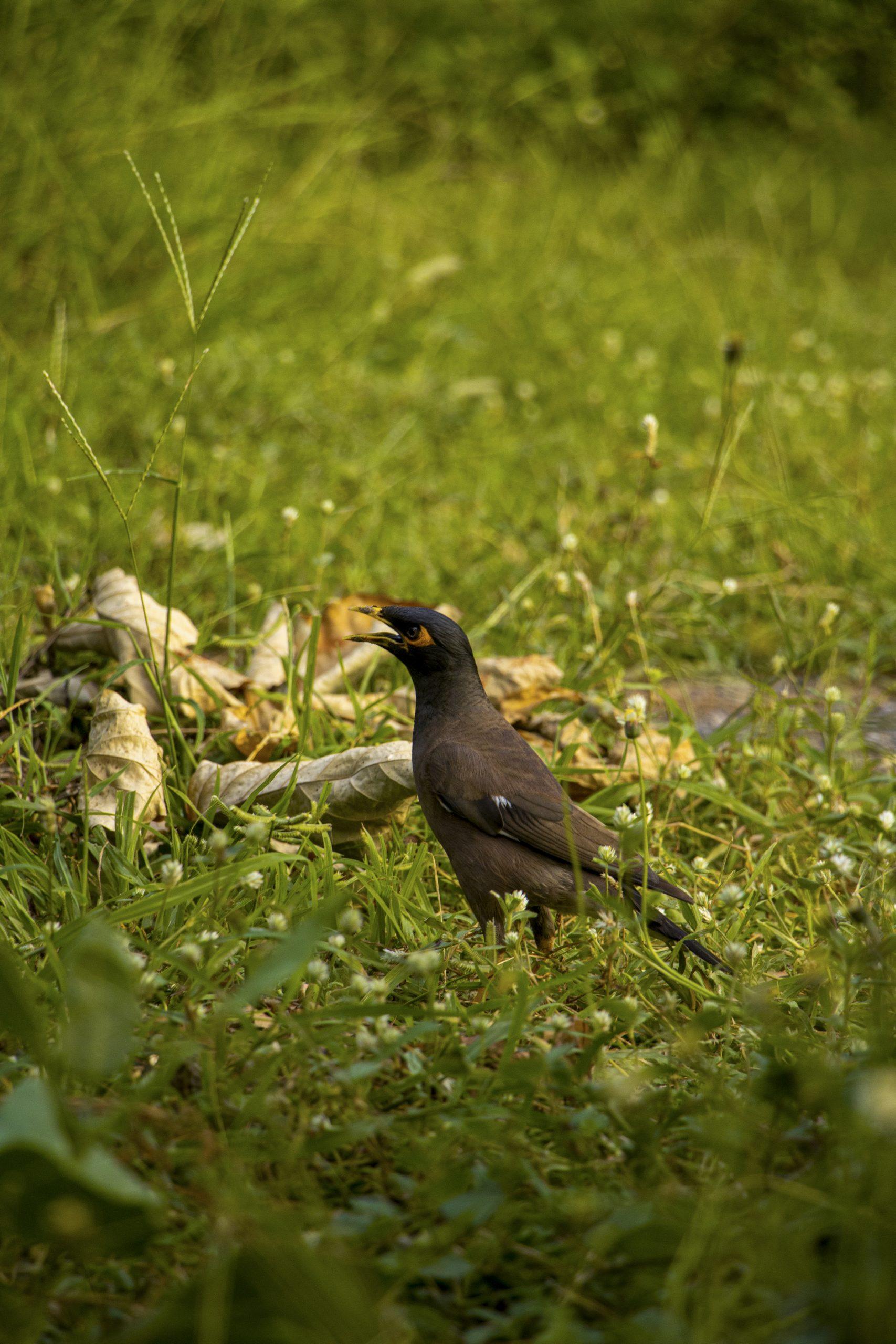 A black bird on the ground.