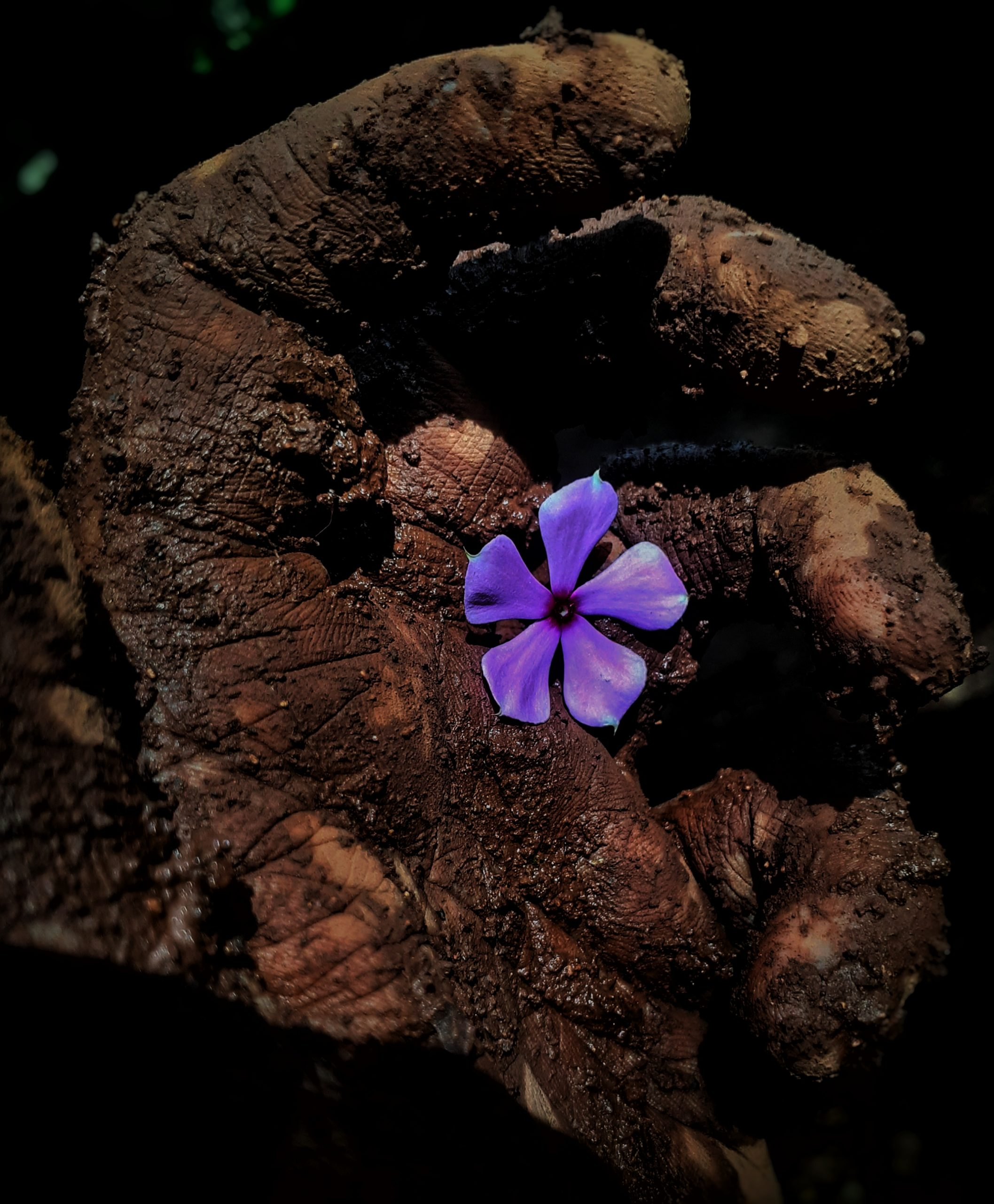flower in muddy hand