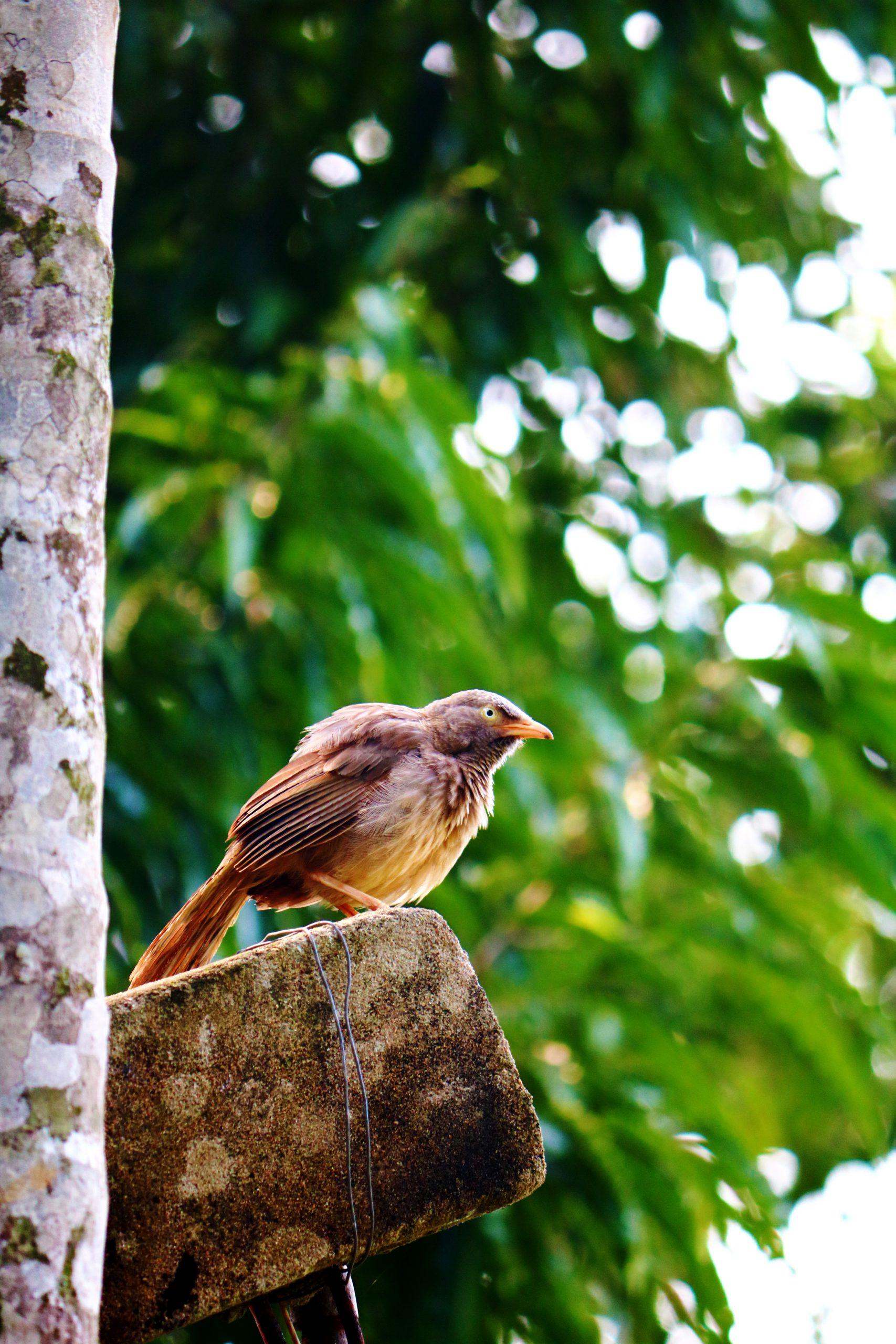 A sparrow sitting on a pole