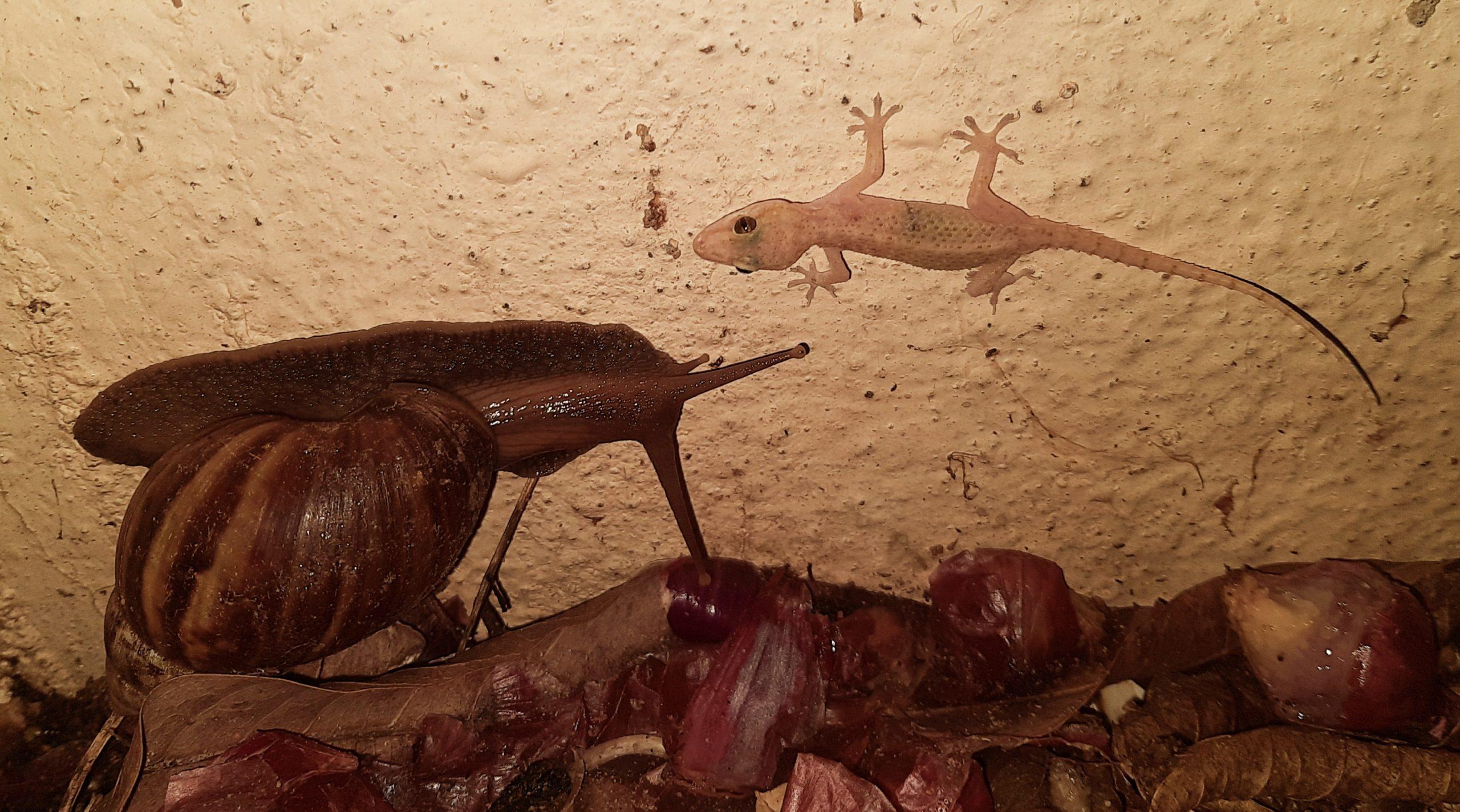 A Snail and lizard