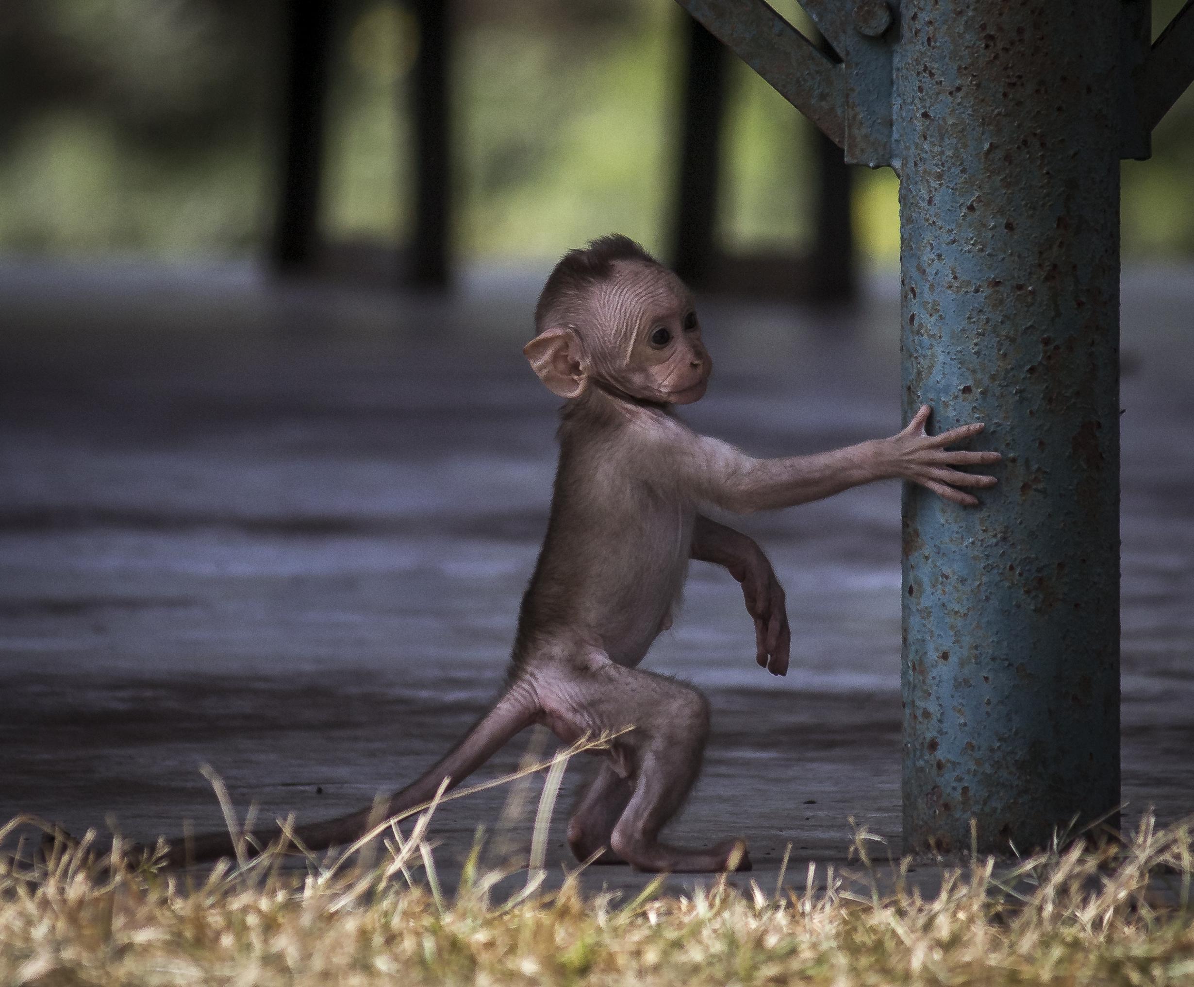 A baby monkey near a pole