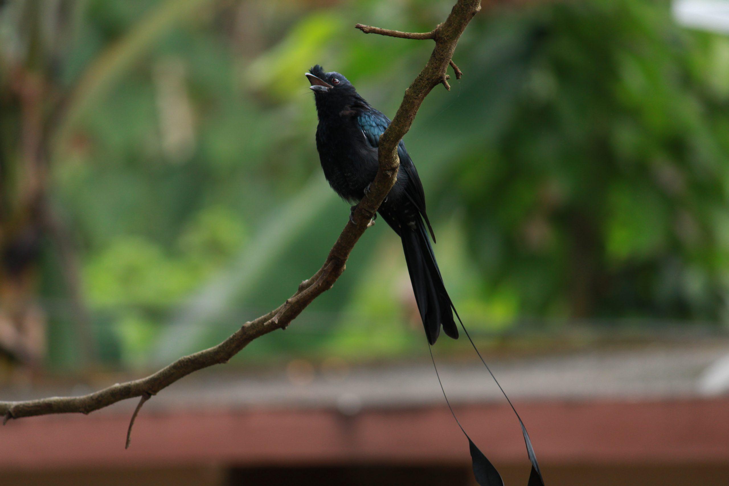 Bird Sitting on tree