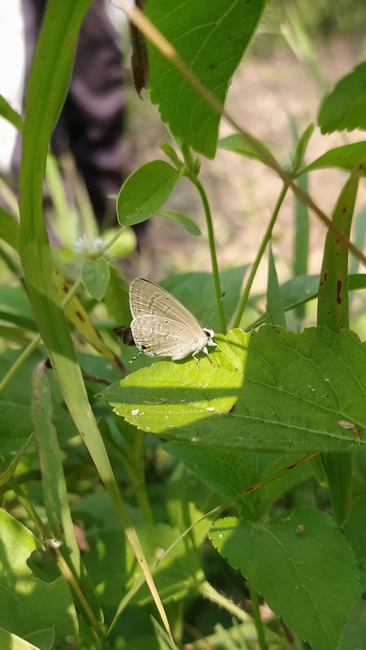 A butterfly on a leaf