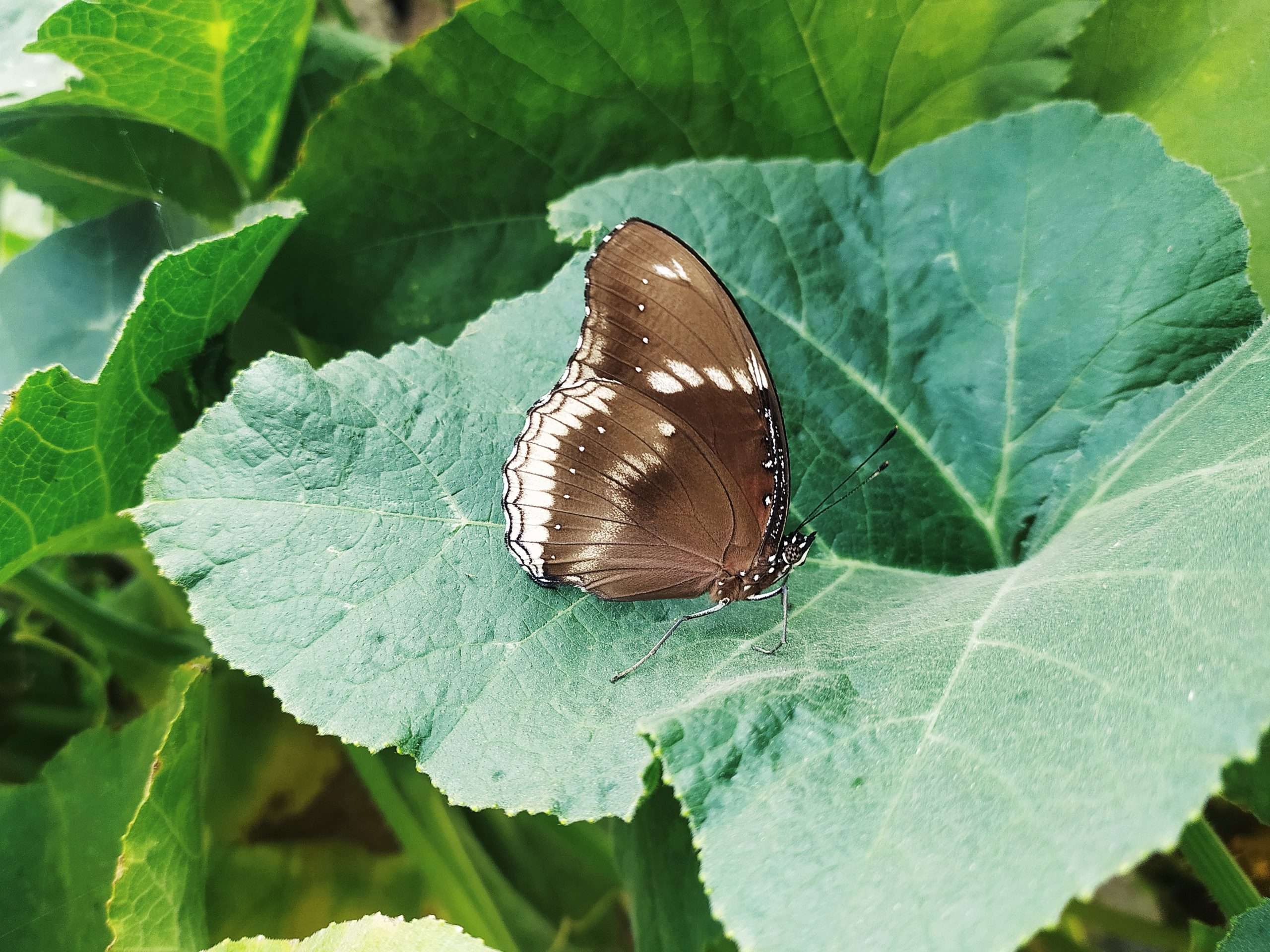 A butterfly on leaf