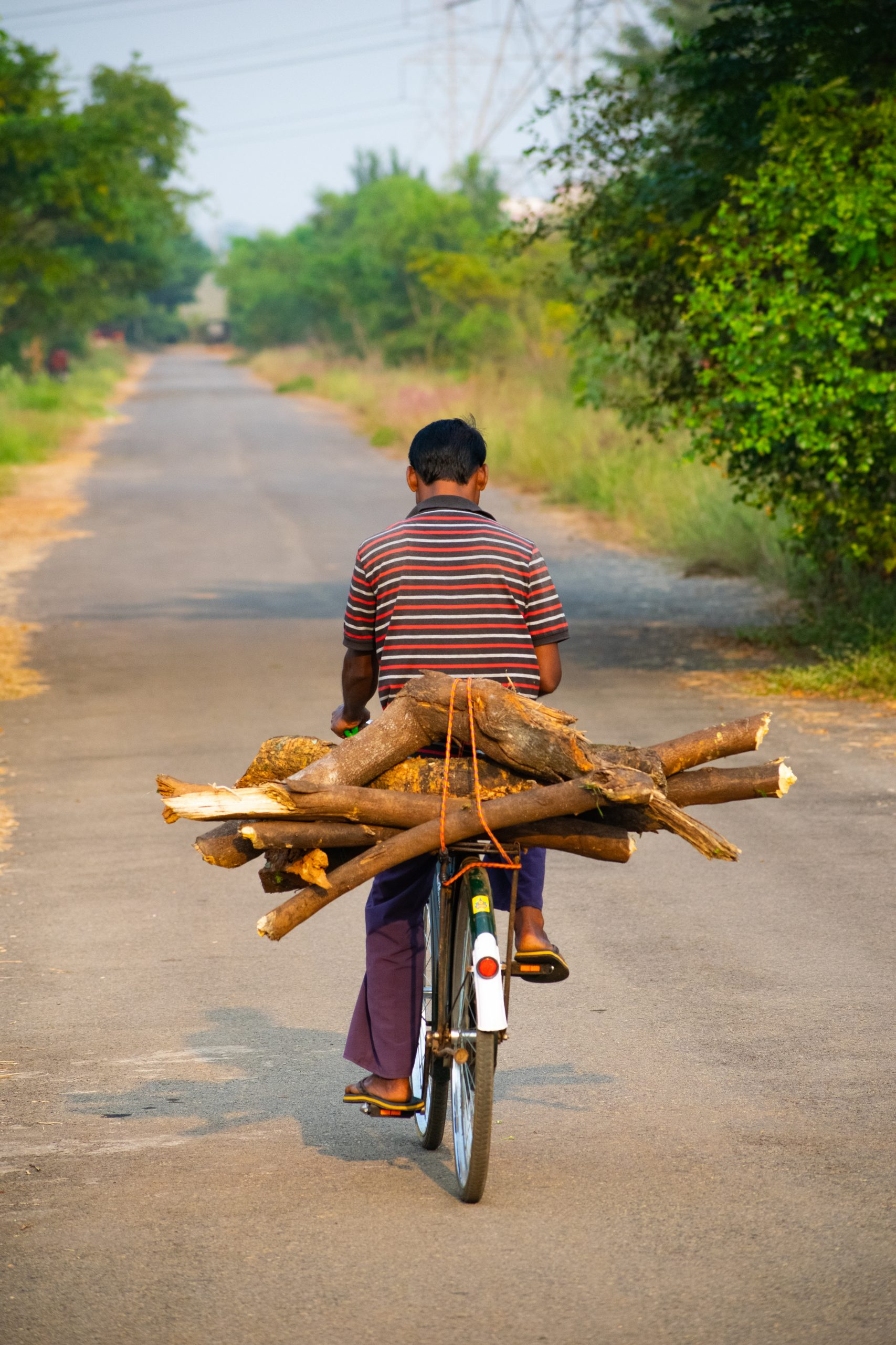 man carrying logs on bicycle