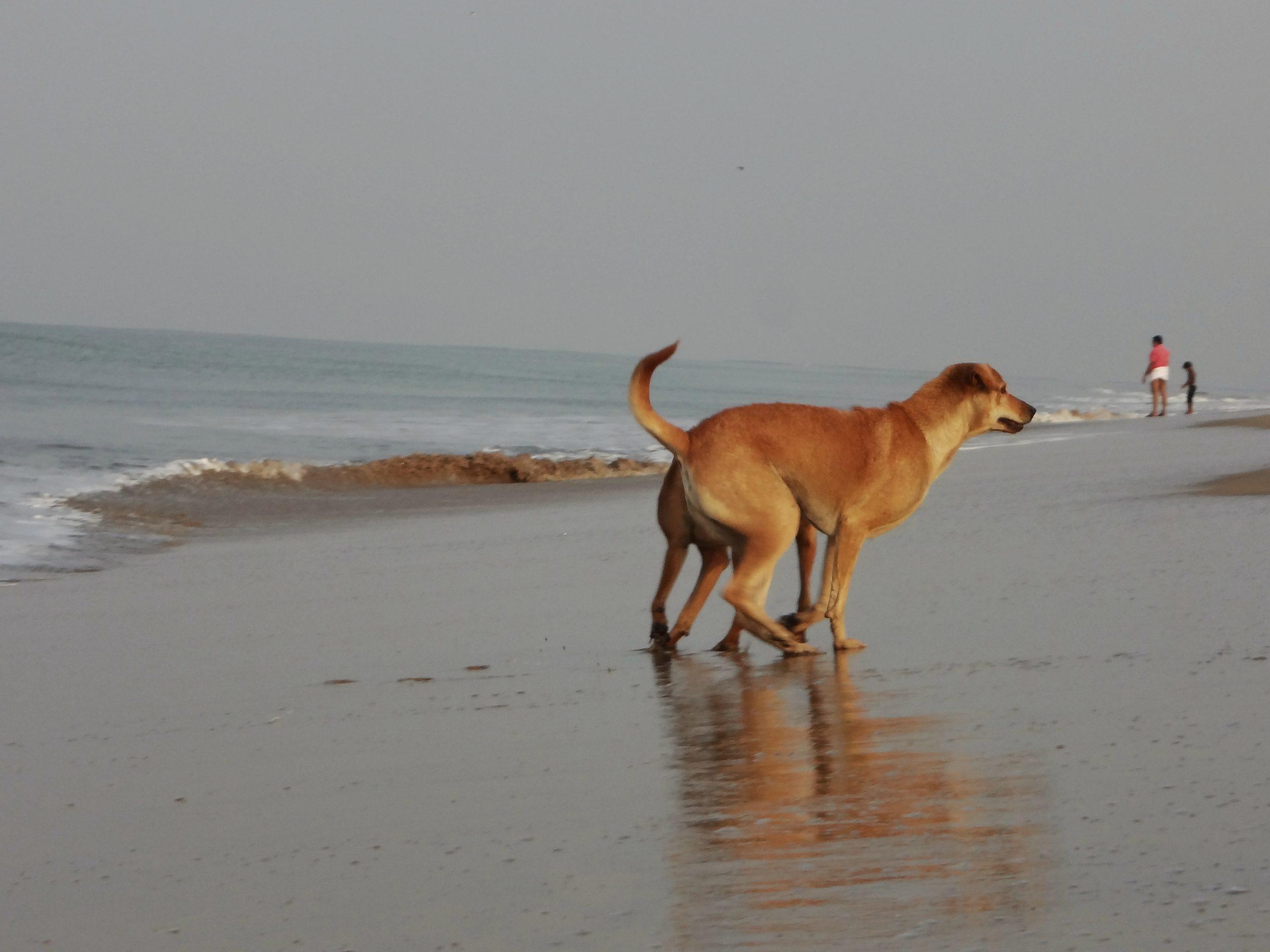A dog at a beach