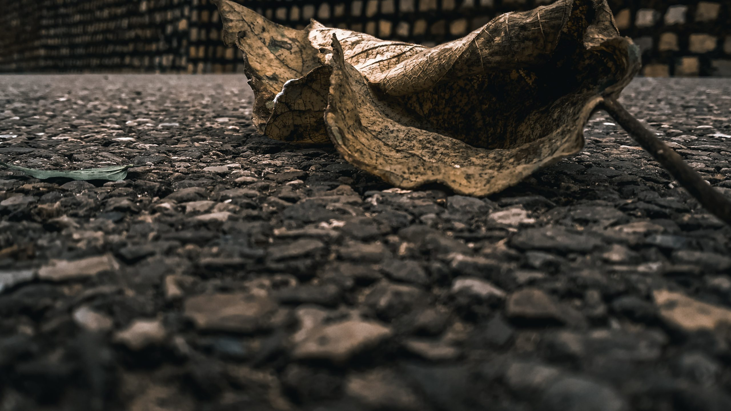 A dry leaf on road