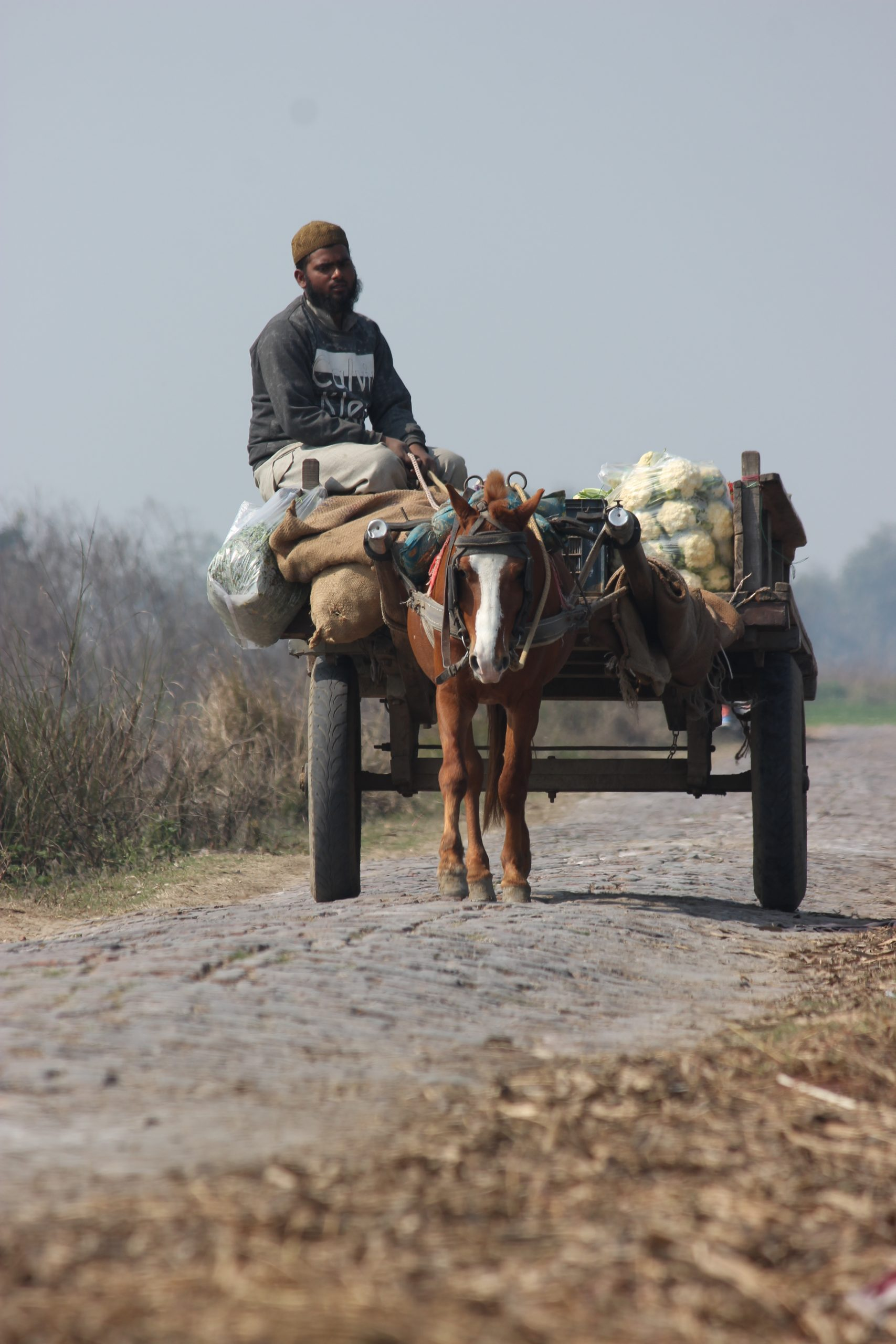 A man carrying load on horse cart