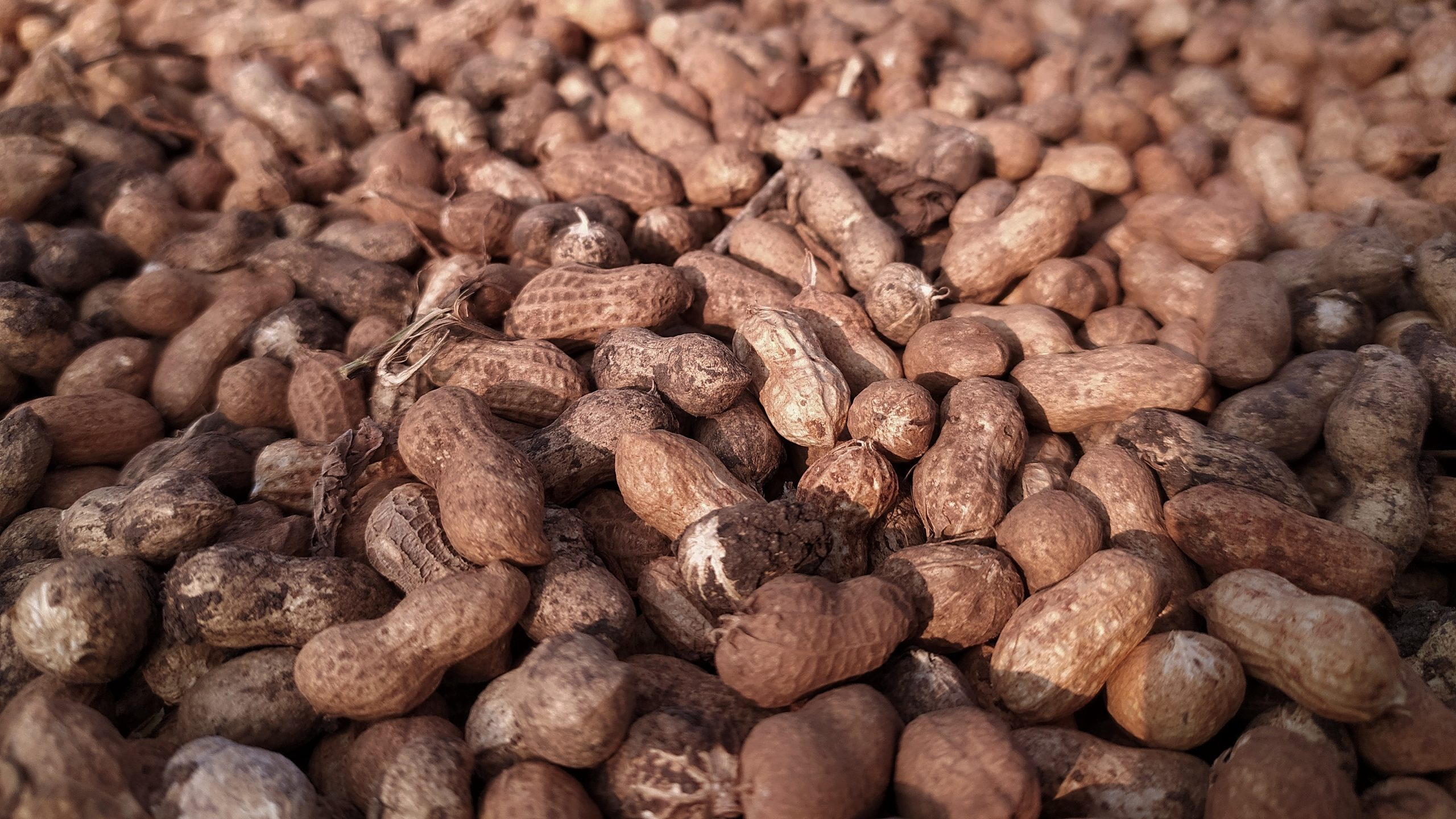 A pile of groundnuts
