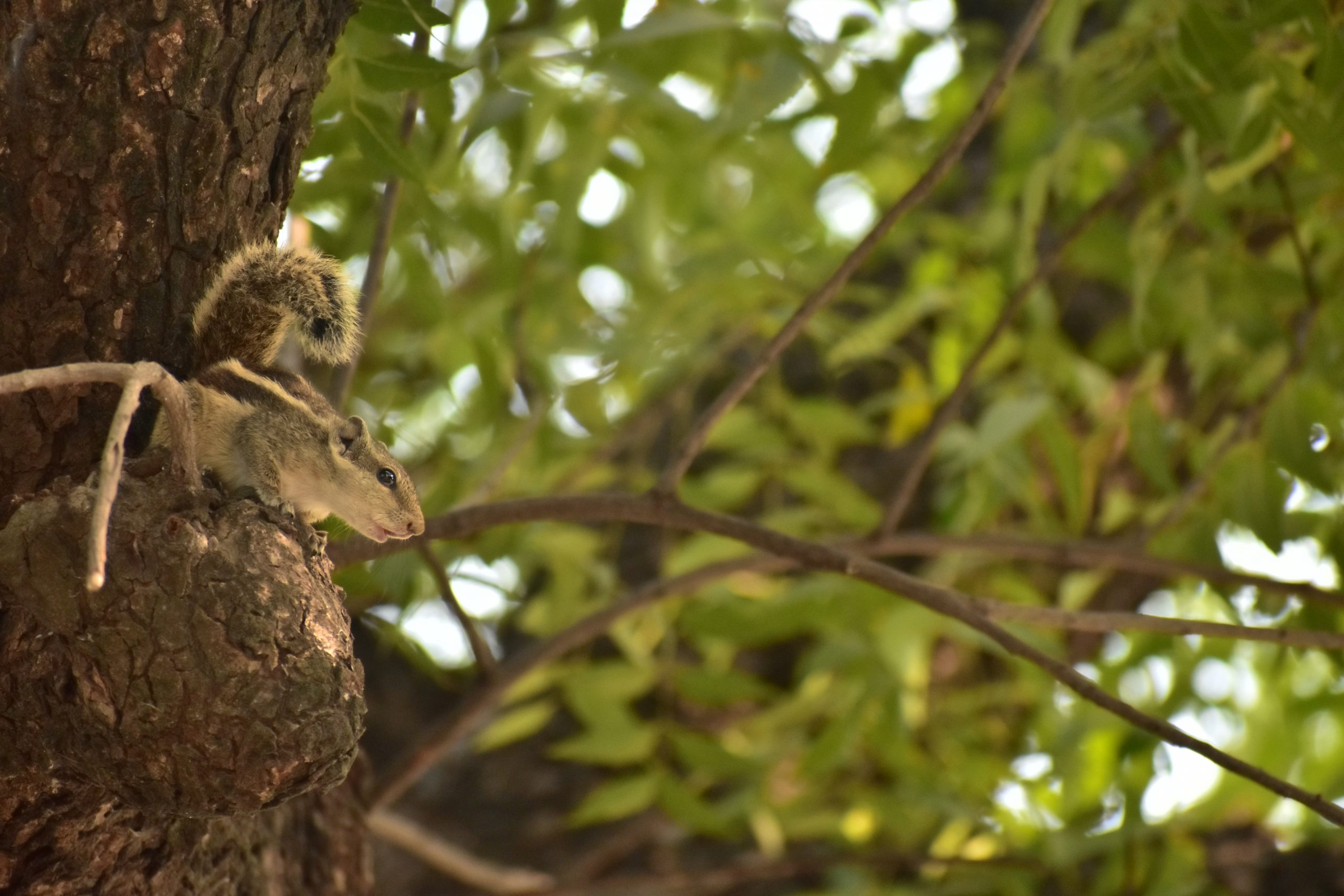 A squirrel on a tree