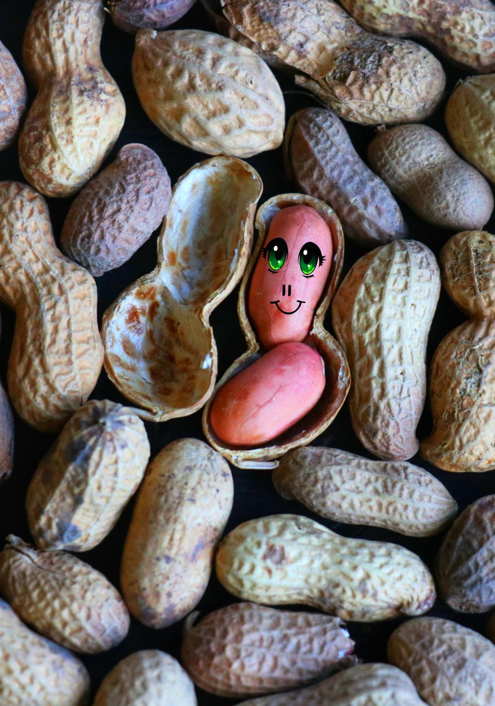 Art on peanuts