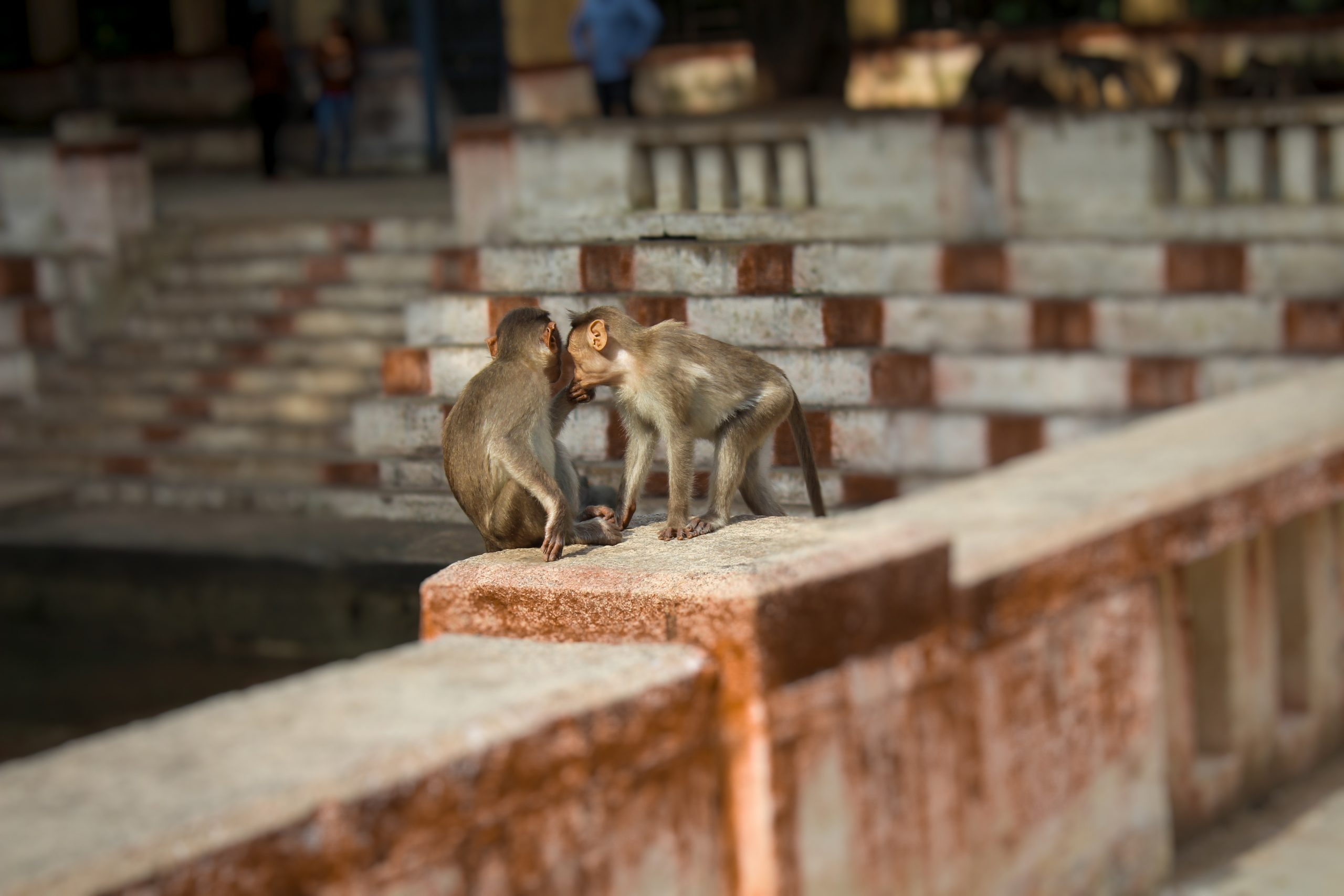 Baby monkeys on a railing