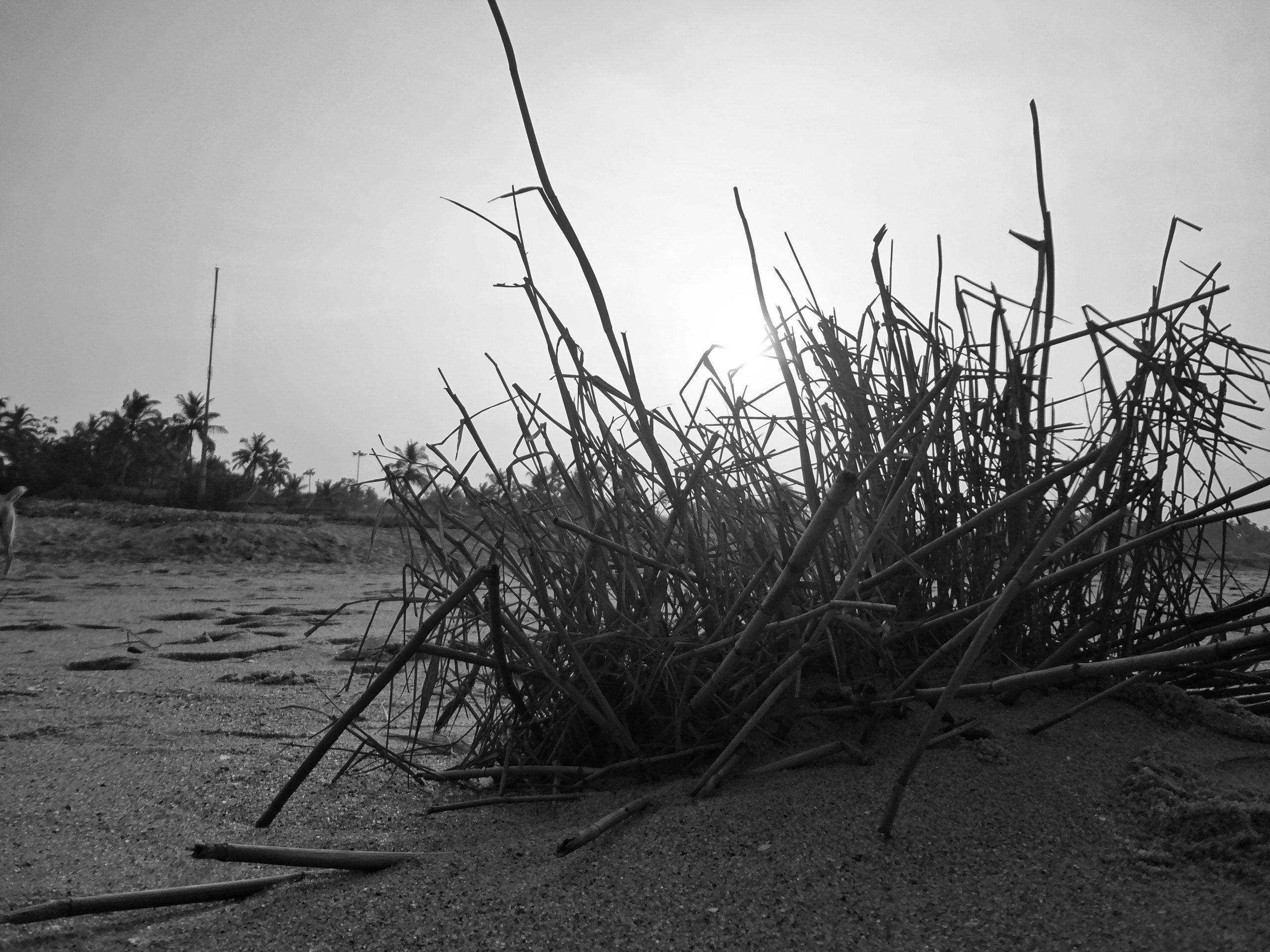 Grass at a beach
