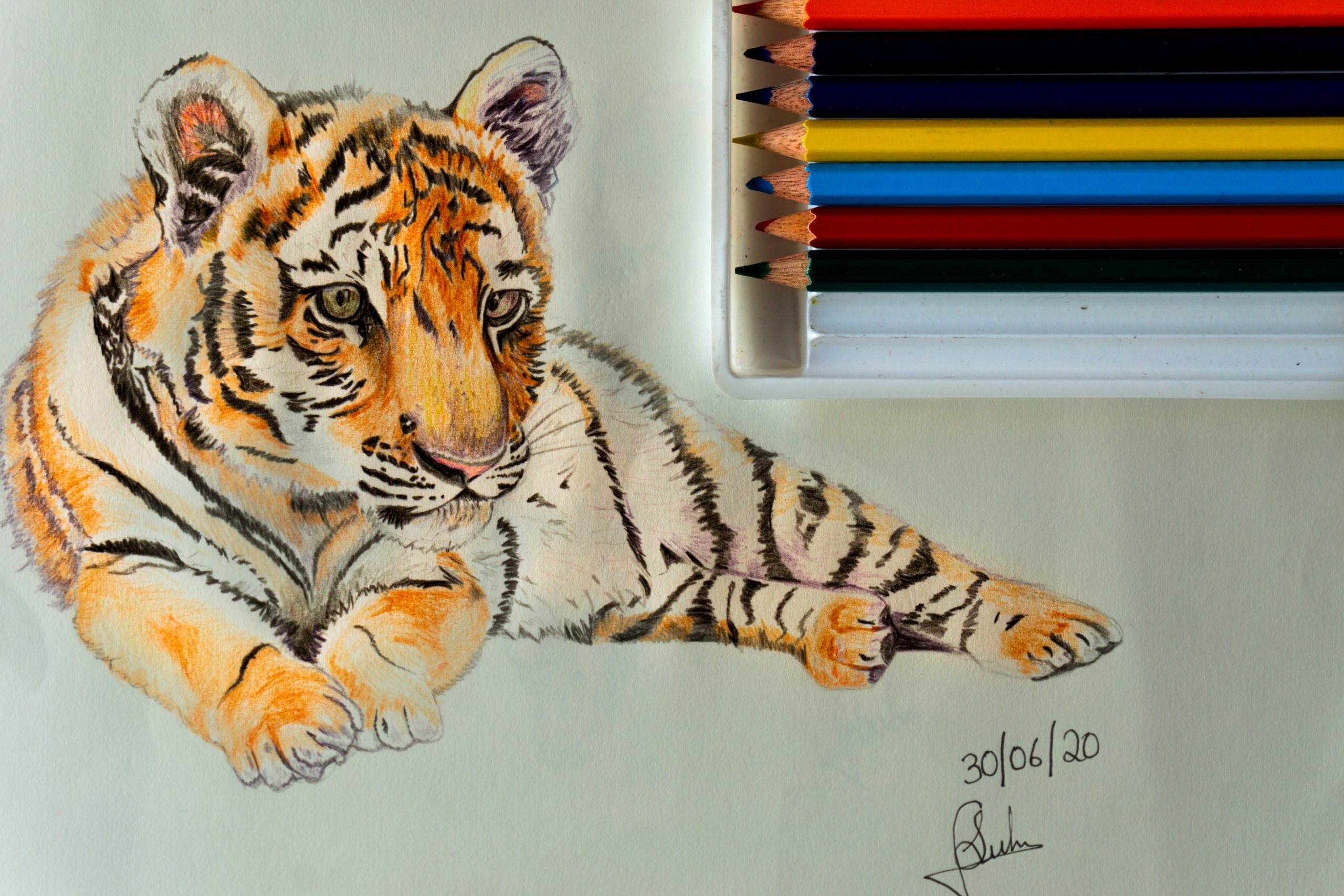 sketch of a tiger