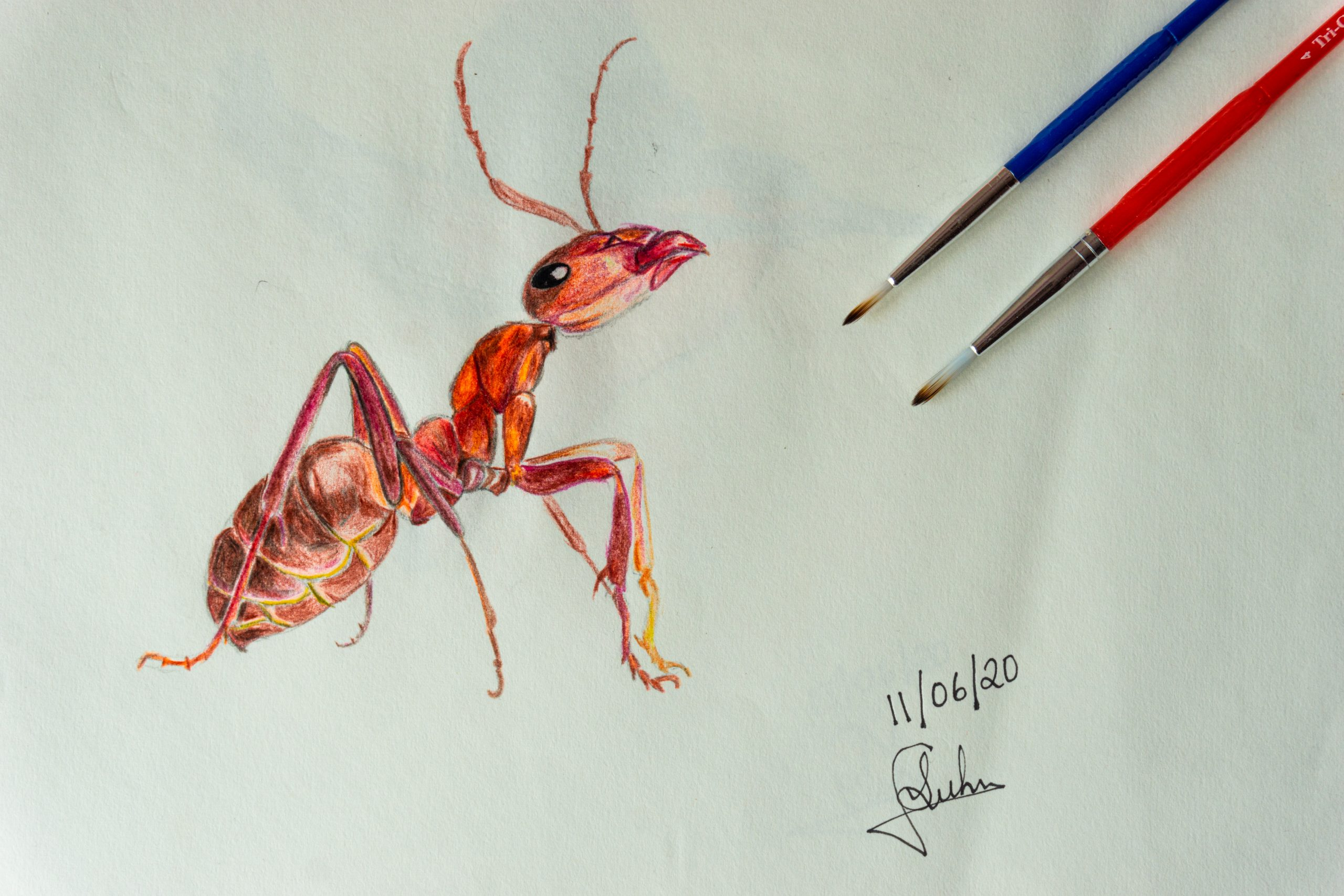 sketch of an ant