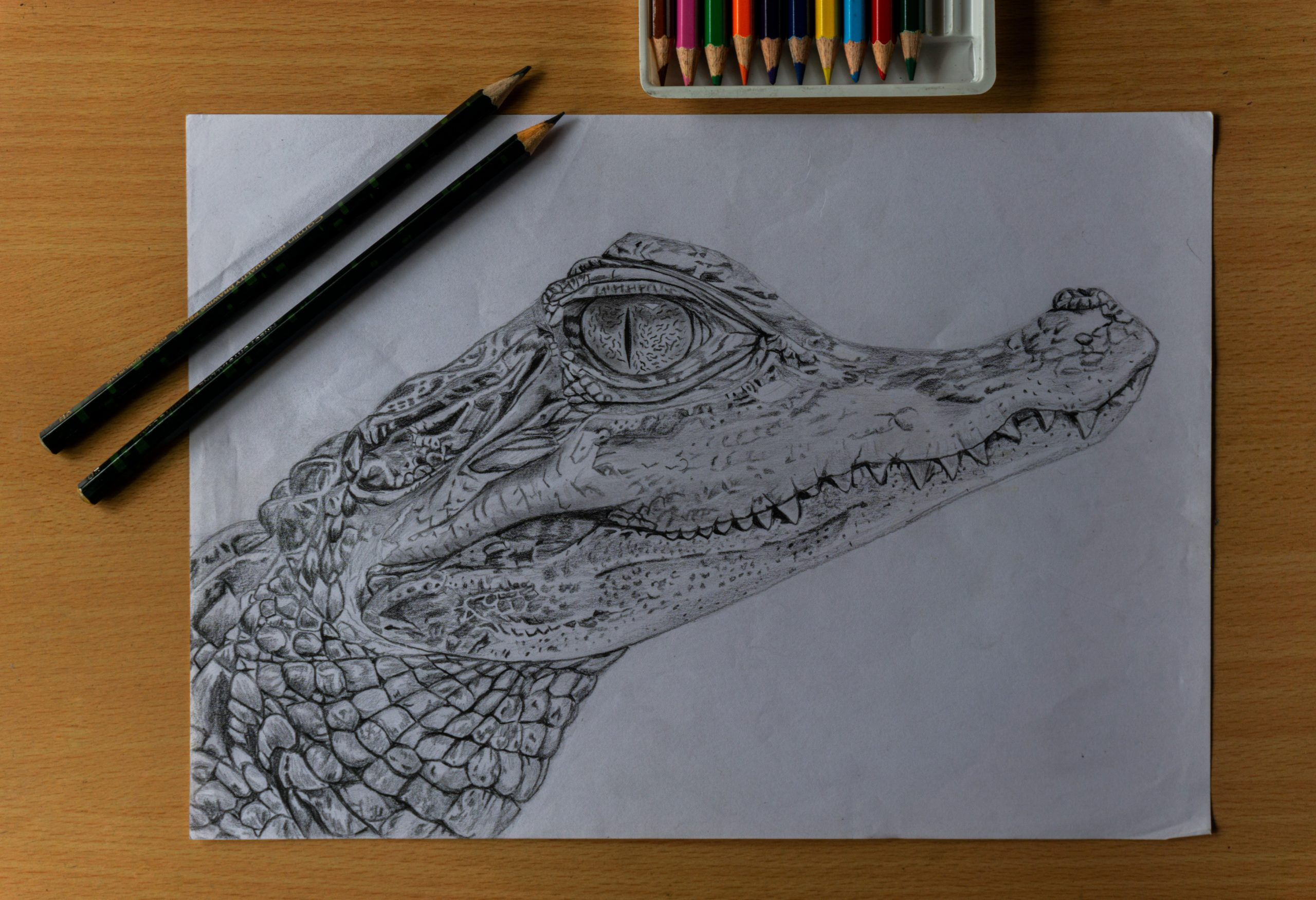 sketch of a crocodile