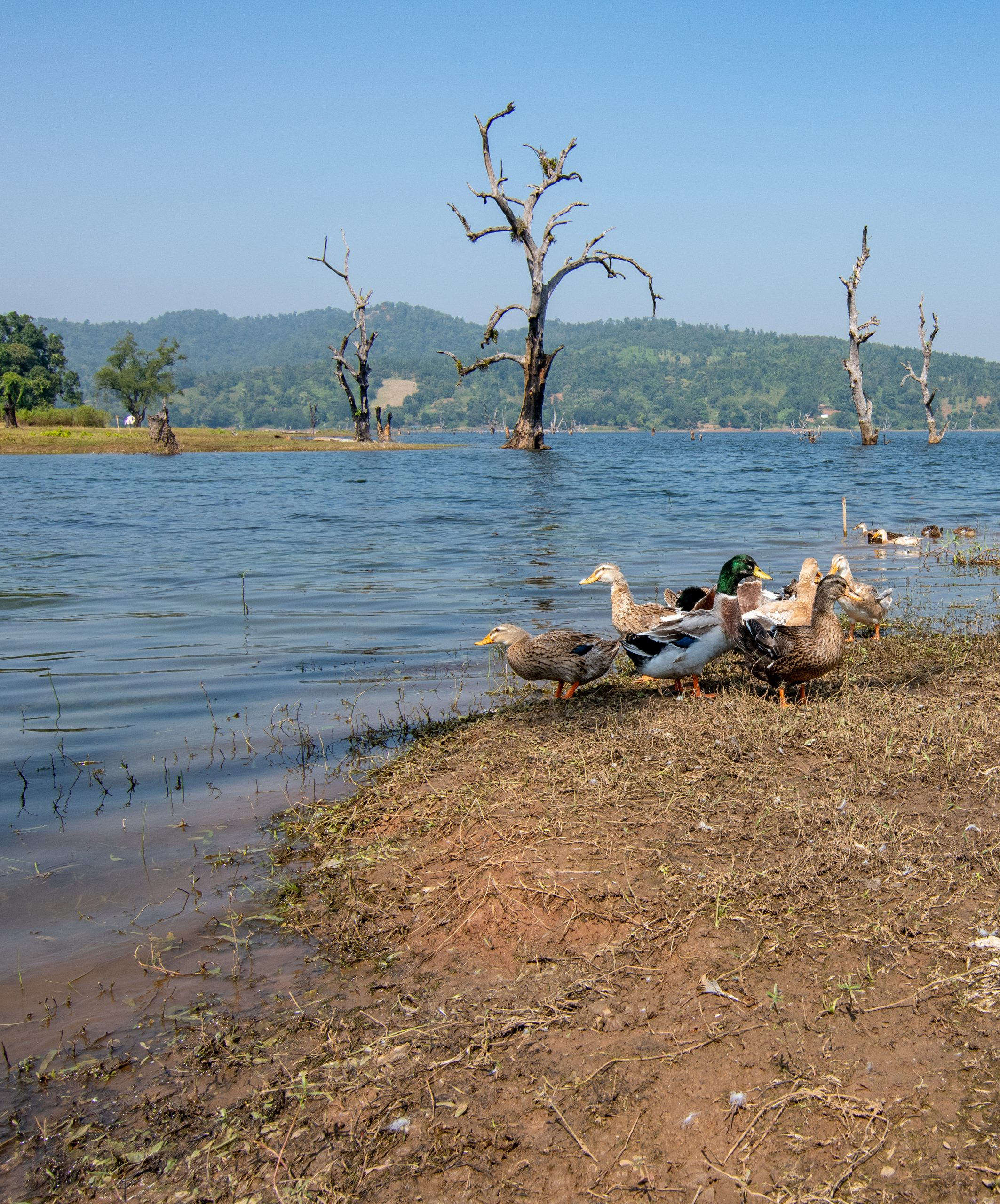 Birds near a lake